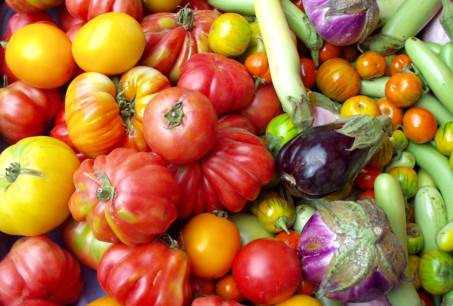 Heirloom tomatoes and eggplant from Tiny's. Photo copyright 2009 by Zachary D. Lyons.