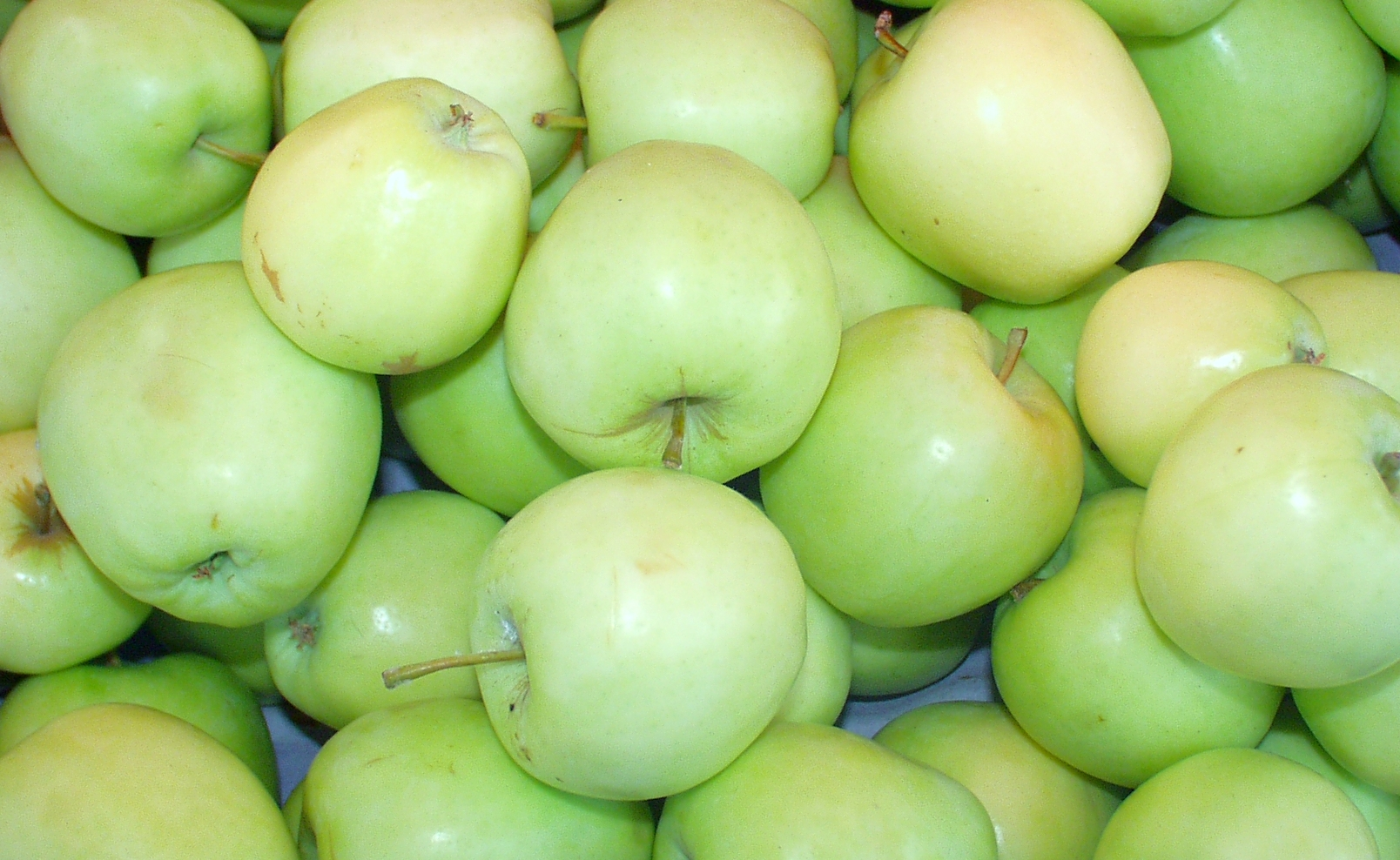 Shamrock apples, from Tiny's, are one of the first apples of the season. Photo copyright 2009 by Zachary D. Lyons.