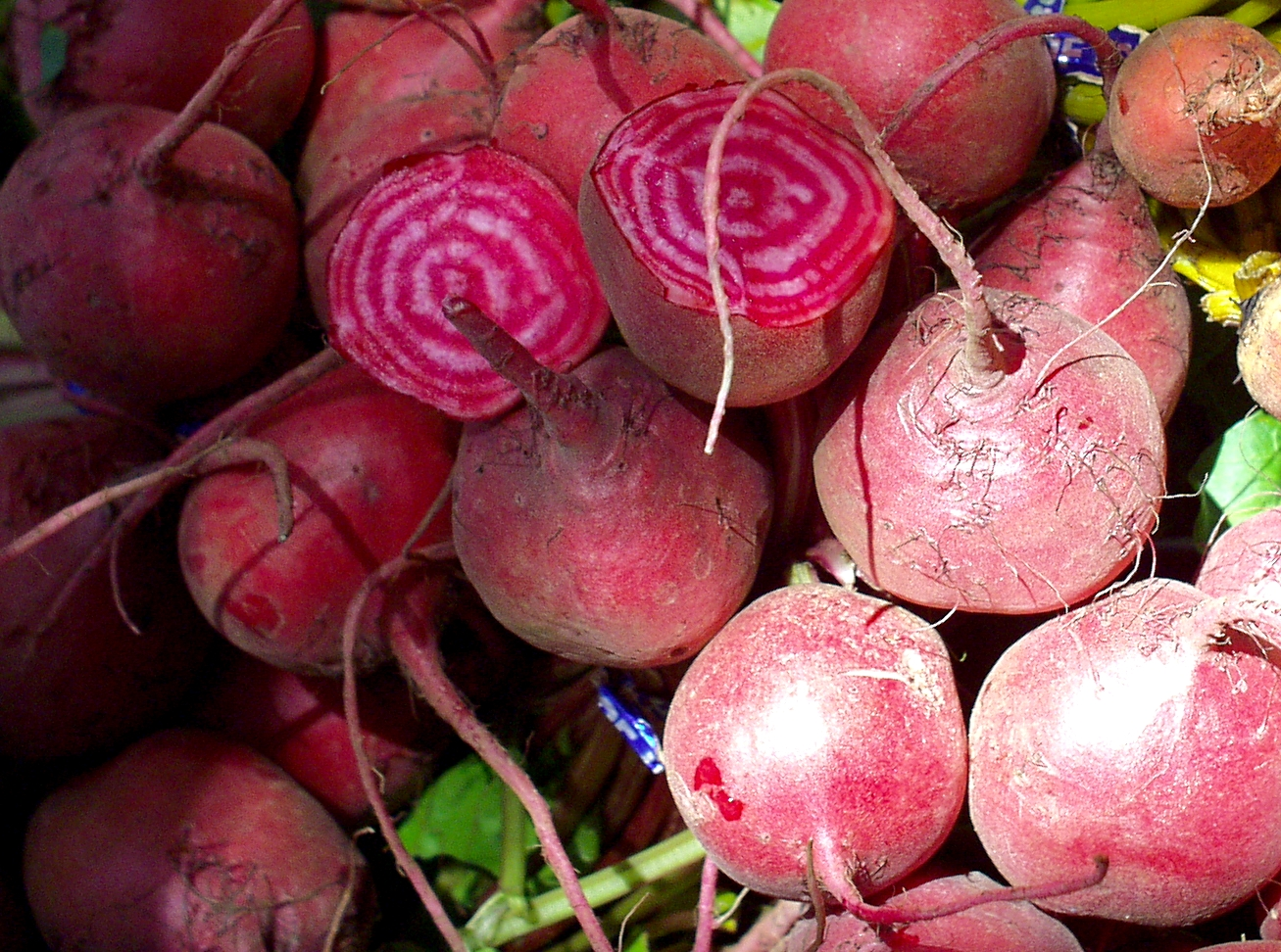 Chiogga beets from Boistfort Valley. Photo copyright 2009 by Zachary D. Lyons.