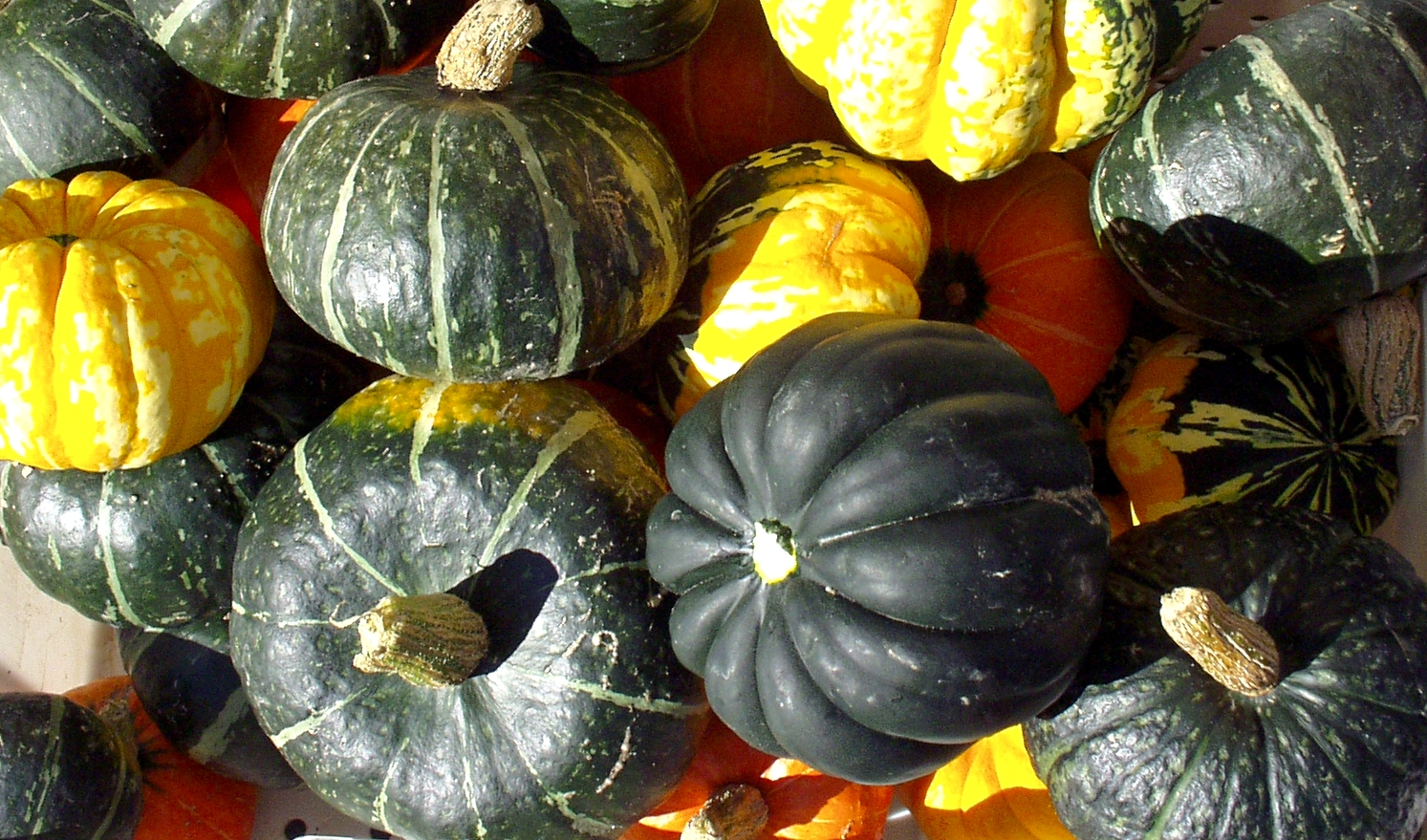 Winter squash from Growing Things. Photo copyright 2009 by Zachary D. Lyons.