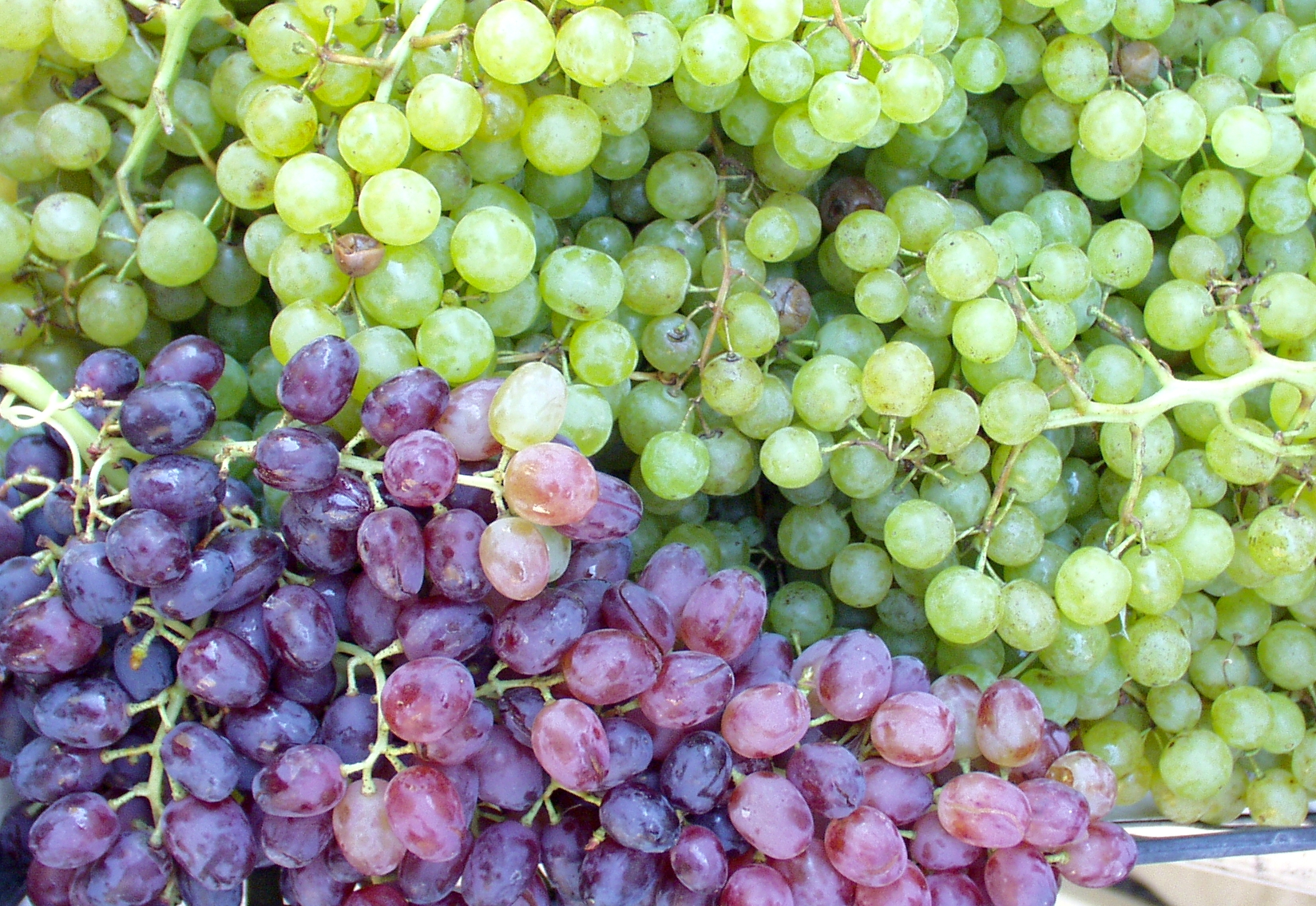 Table grapes from Magana. Photo copyright 2009 by Zachary D. Lyons.