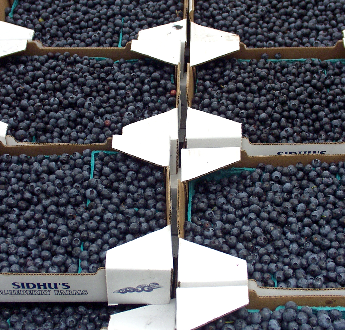 Blueberries from Sidhu Farms. Photo copyright 2009 by Zachary D. Lyons.