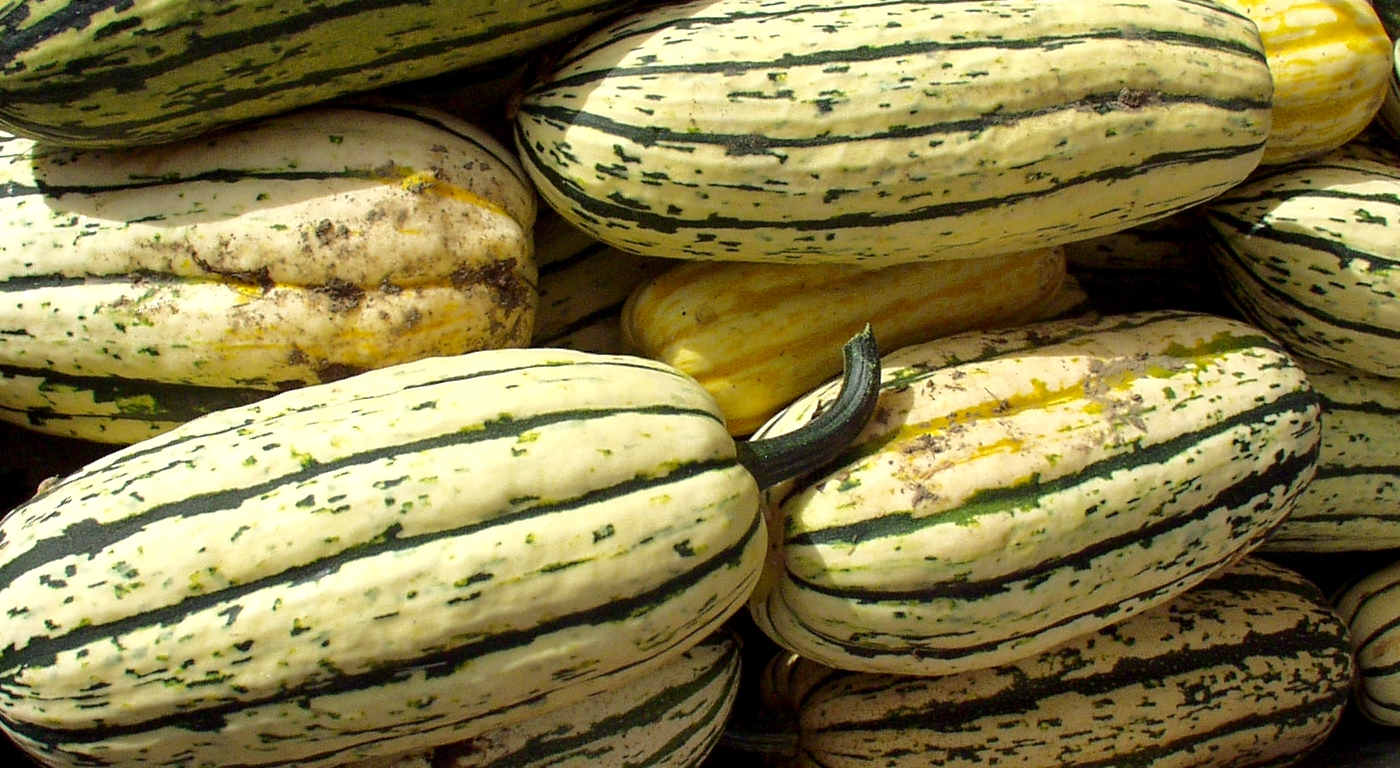 Delicata squash from Alm Hill Gardens. Photo copyright 2009 by Zachary D. Lyons.