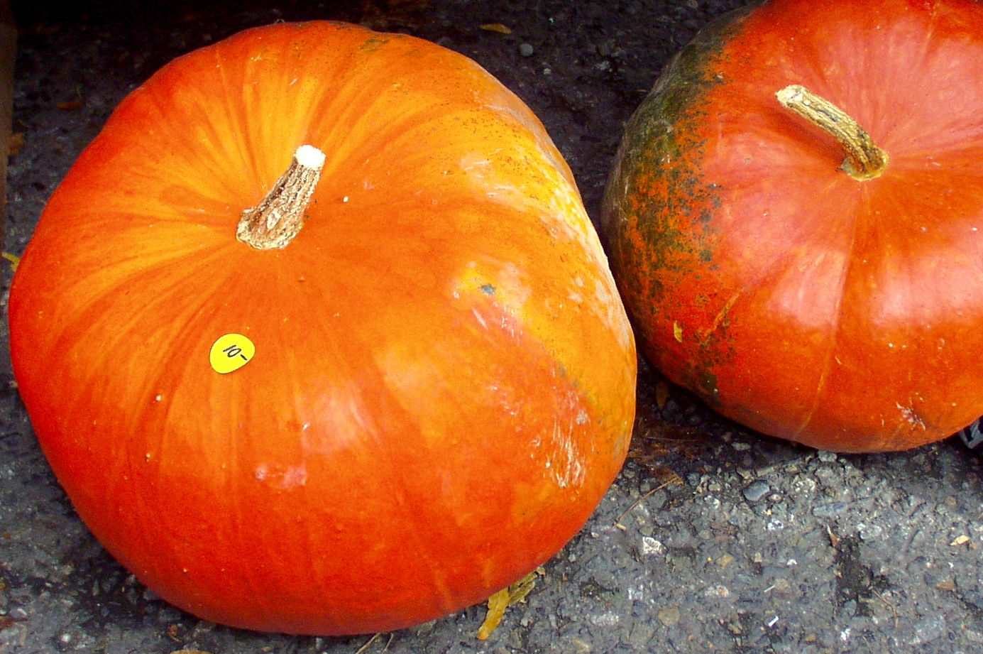 Cinderella pumpkins from G & J Orchards. Photo copyright 2009 by Zachary D. Lyons.