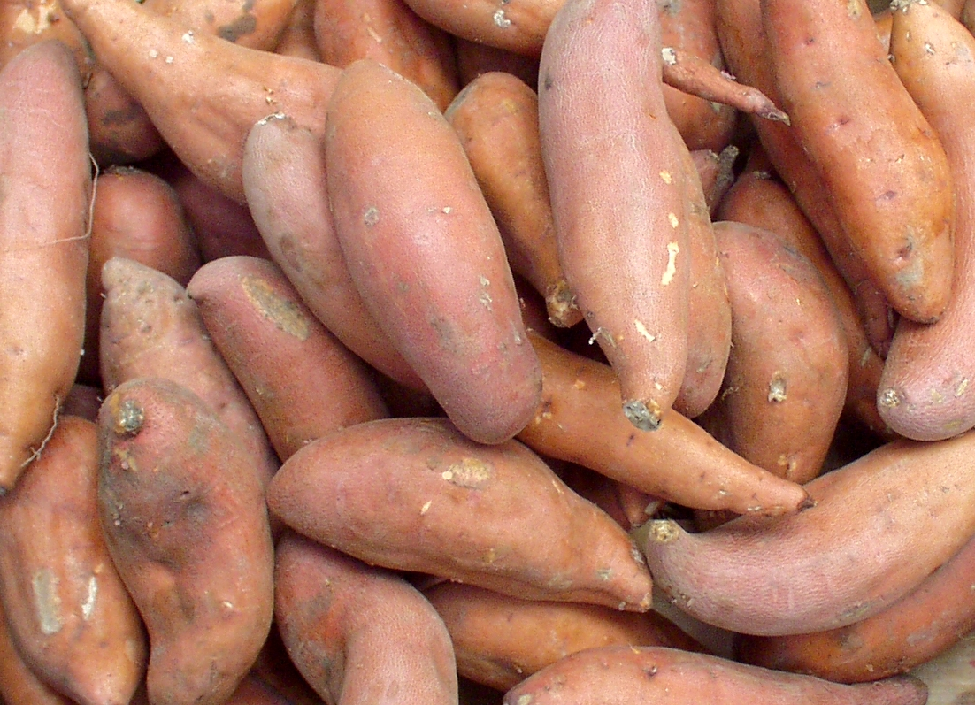 Beautiful Beauregard sweet potatoes from Lyall Farms. Photo copyright 2009 by Zachary D. Lyons.