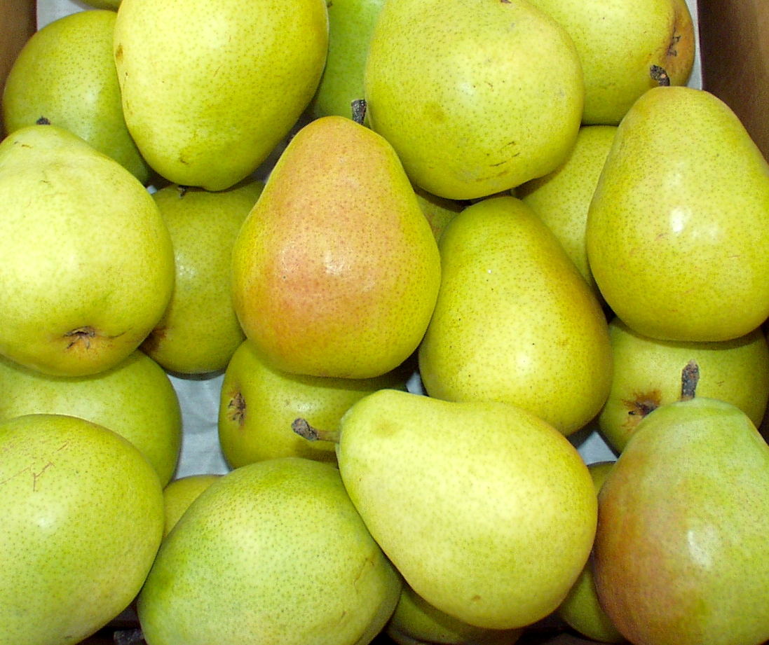 D'Anjou pears from Booth Canyon Orchards. Photo copyright 2010 by Zachary D. Lyons.