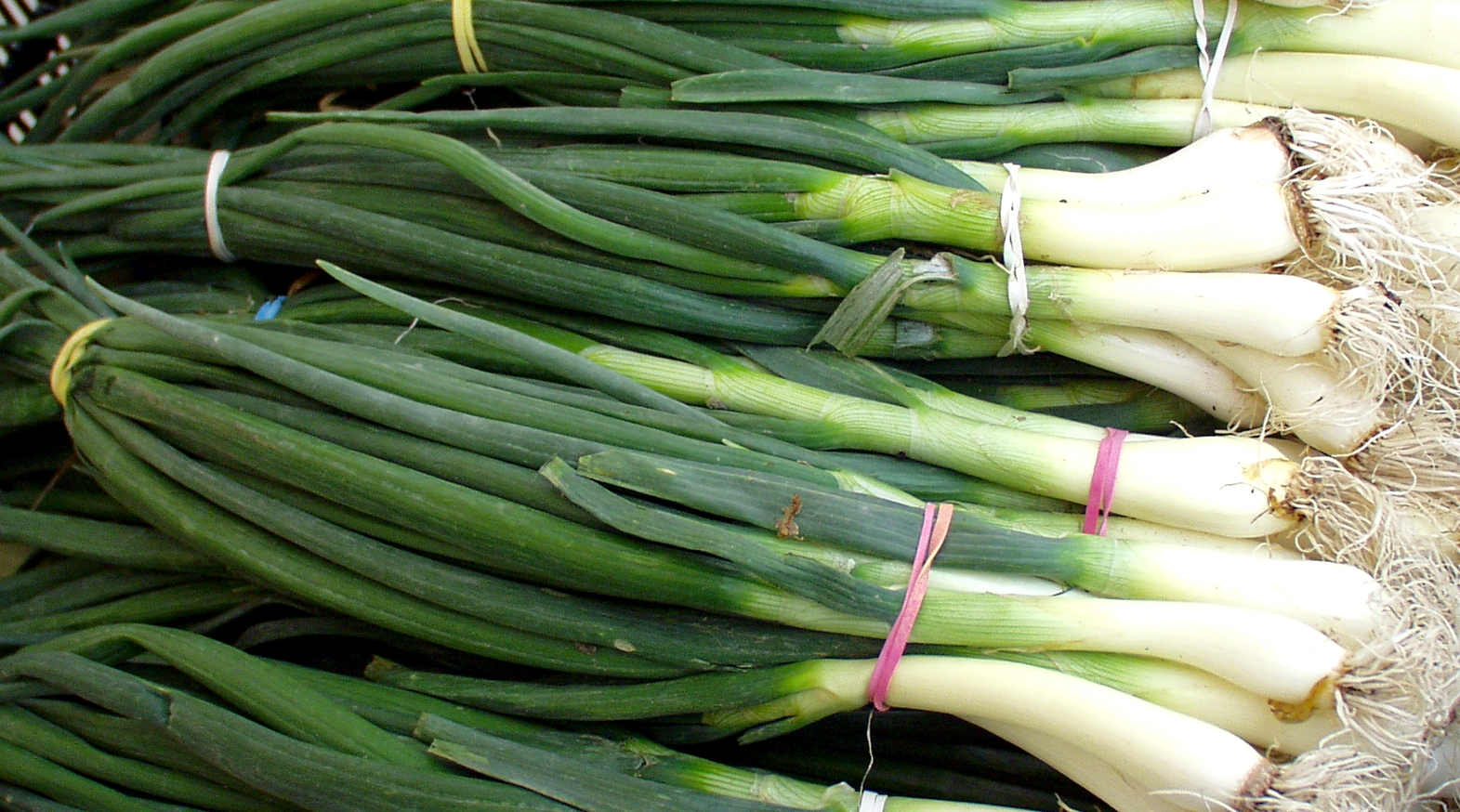 Spring onions from Magana Farms. Photo copyright 2010 by Zachary D. Lyons.