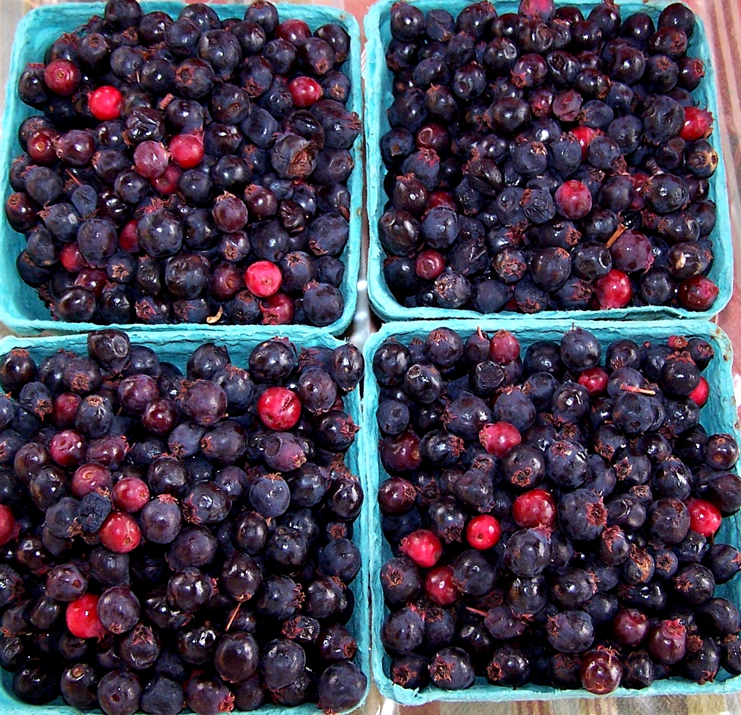 Saskatoon berries from Foraged & Found Edibles. Photo copyright 2010 by Zachary D. Lyons.