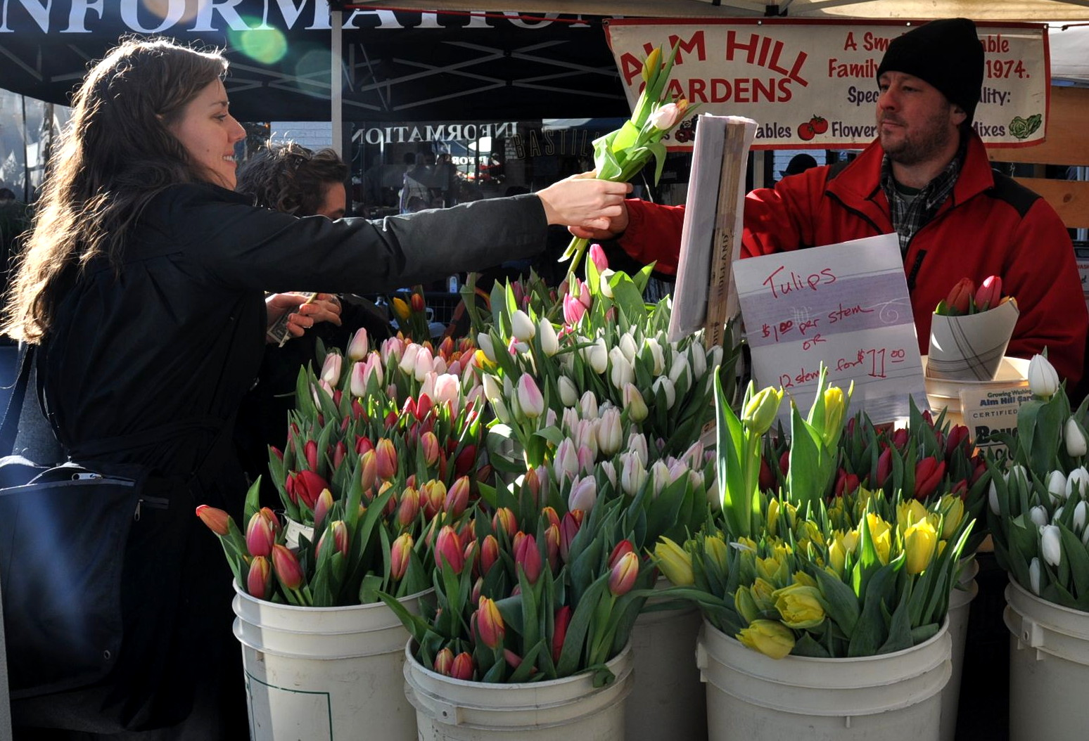 Fresh cut tulips from Alm Hill. Photo copyright 2011 by Zachary D. Lyons.