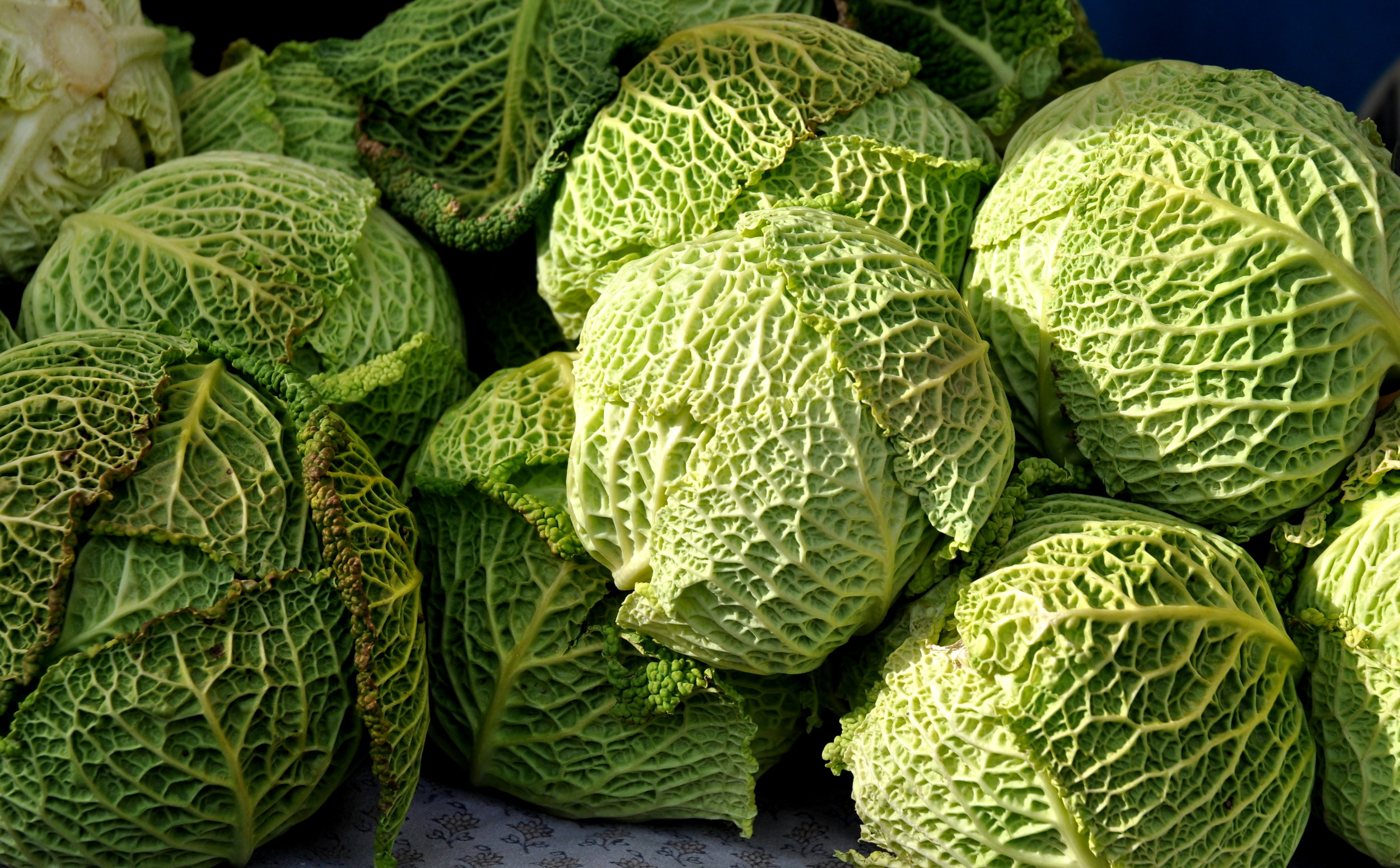 Over-winterd Savoy cabbages from Nash's Organic Produce. Photo copyright 2011 by Zachary D. Lyons.