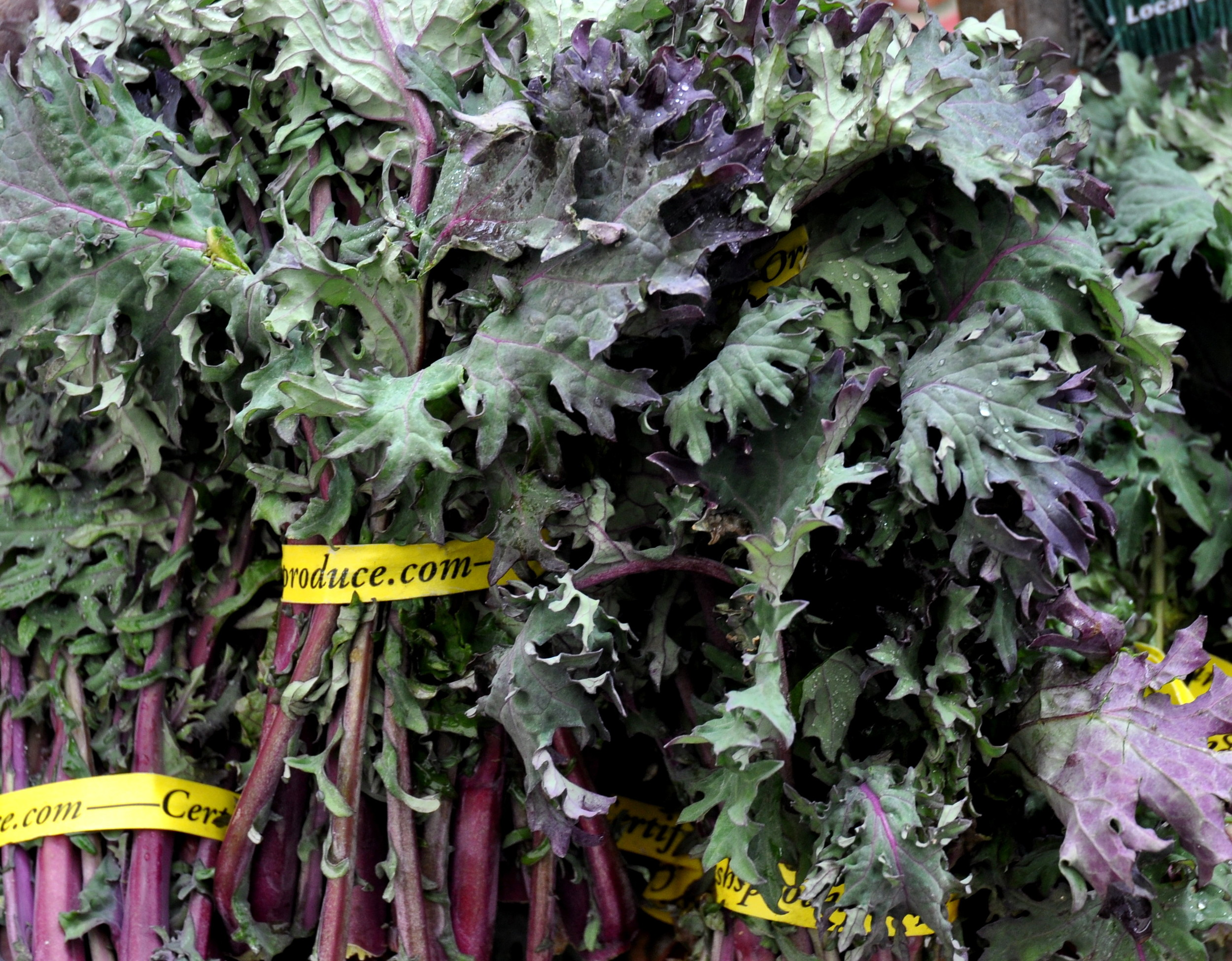Nash's Red Russian Kale from Nash's Organic Produce. Photo copyright 2011 by Zachary D. Lyons.