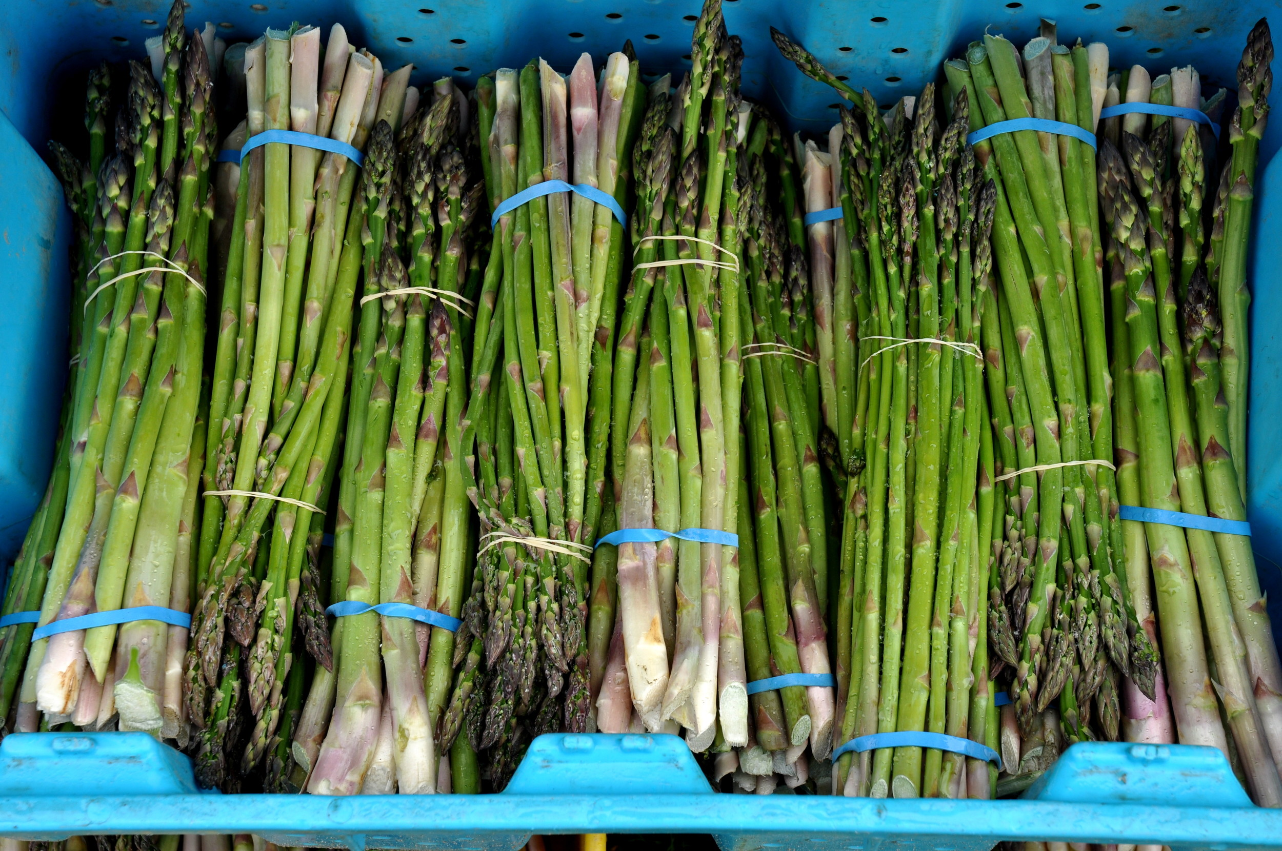 Organic asparagus from Alvarez Organic Farms. Photo copyright 2011 by Zachary D. Lyons.