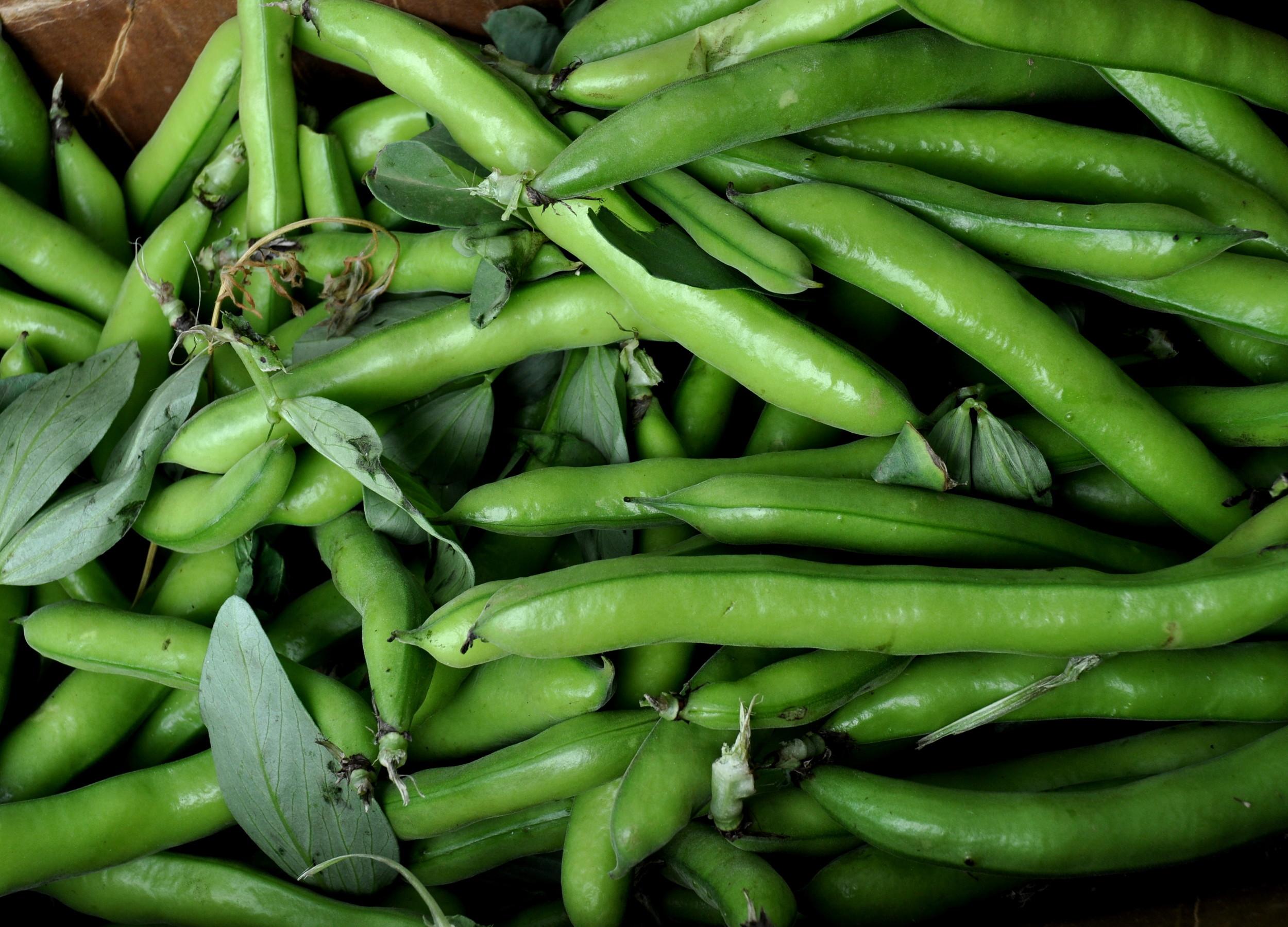 Fresh fava beans from Alvarez Organic Farms. Photo copyright 2011 by Zachary D. Lyons.