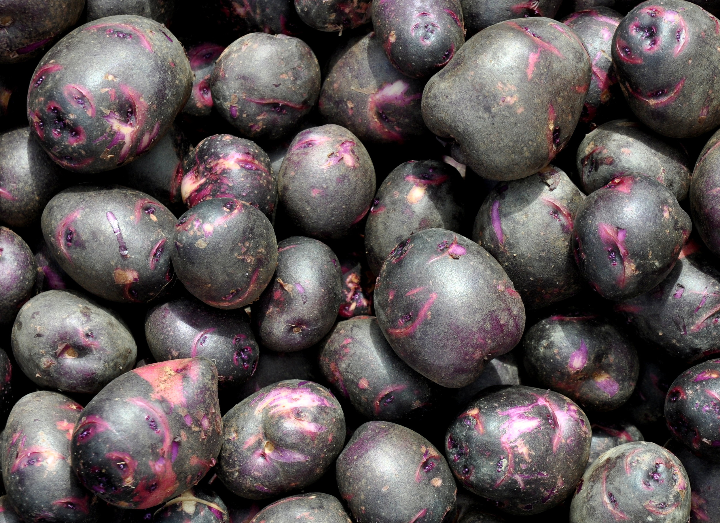Viking purple potatoes from Olsen Farms at Ballard Farmers Market. Copyright 2014 by Zachary D. Lyons.