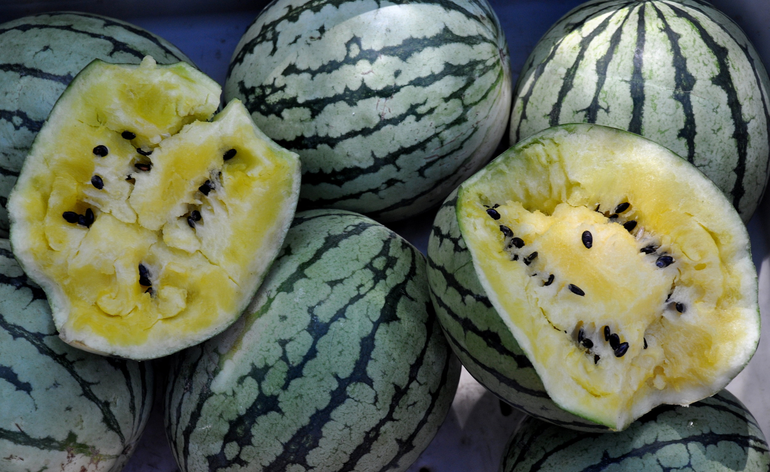 Yellow Doll watermelons from Lyall Farms. Photo copyright 2011 by Zachary D. Lyons.
