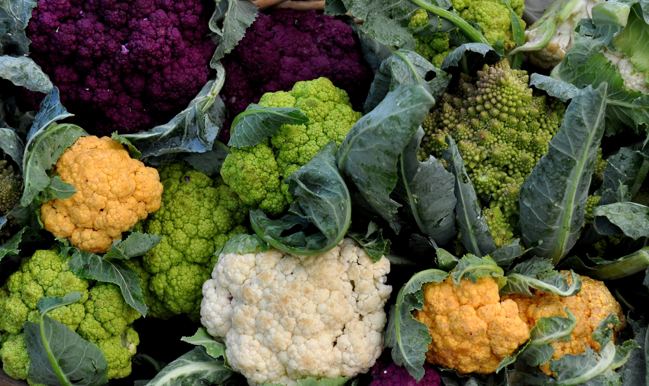 Cauliflower in every color from Growing Things Farm. Photo copyright 2011 by Zachary D. Lyons.