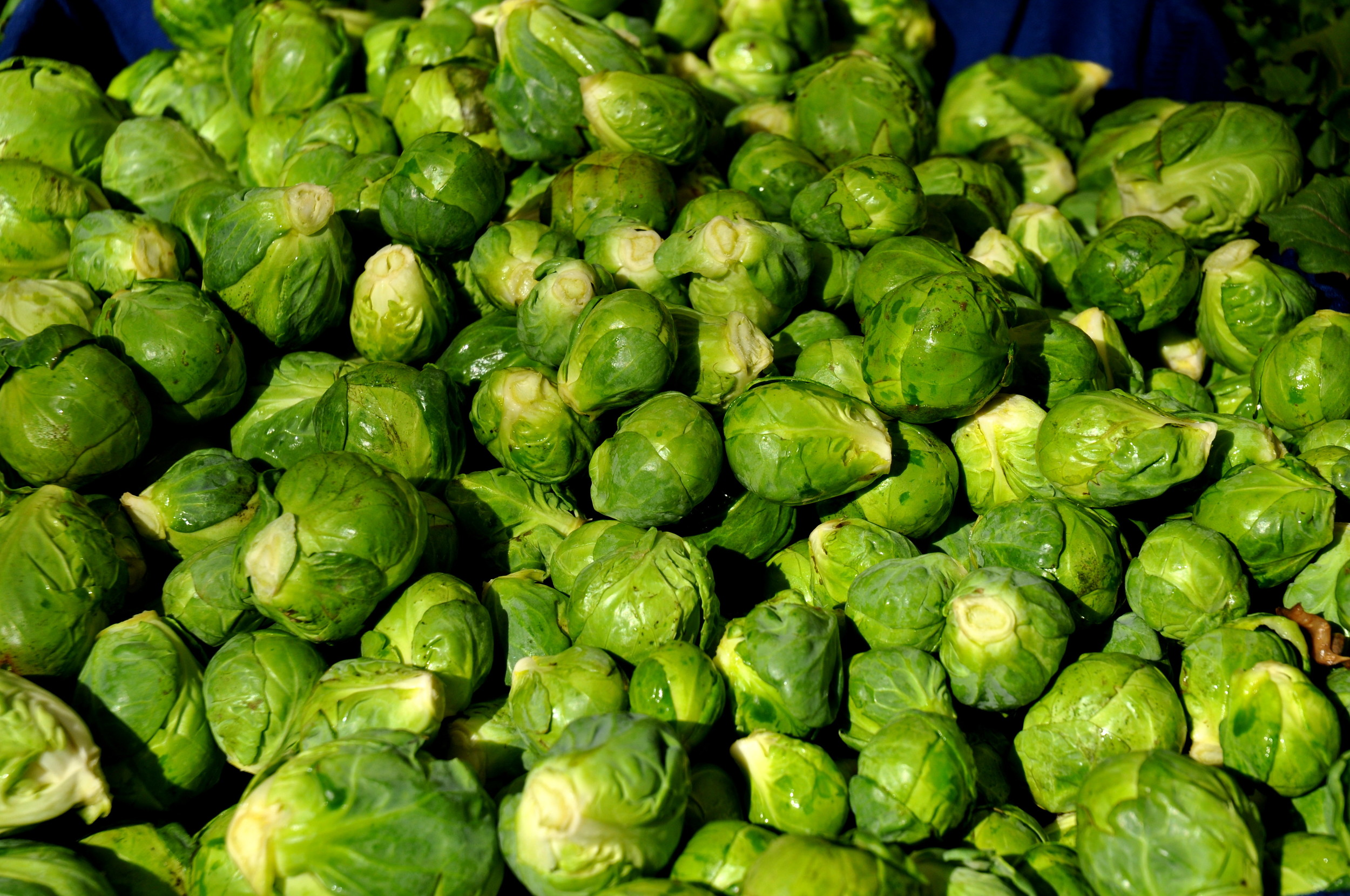 Brussels sprouts from Nash's Organic Produce at Ballard Farmers Market. Copyright Zachary D. Lyons.