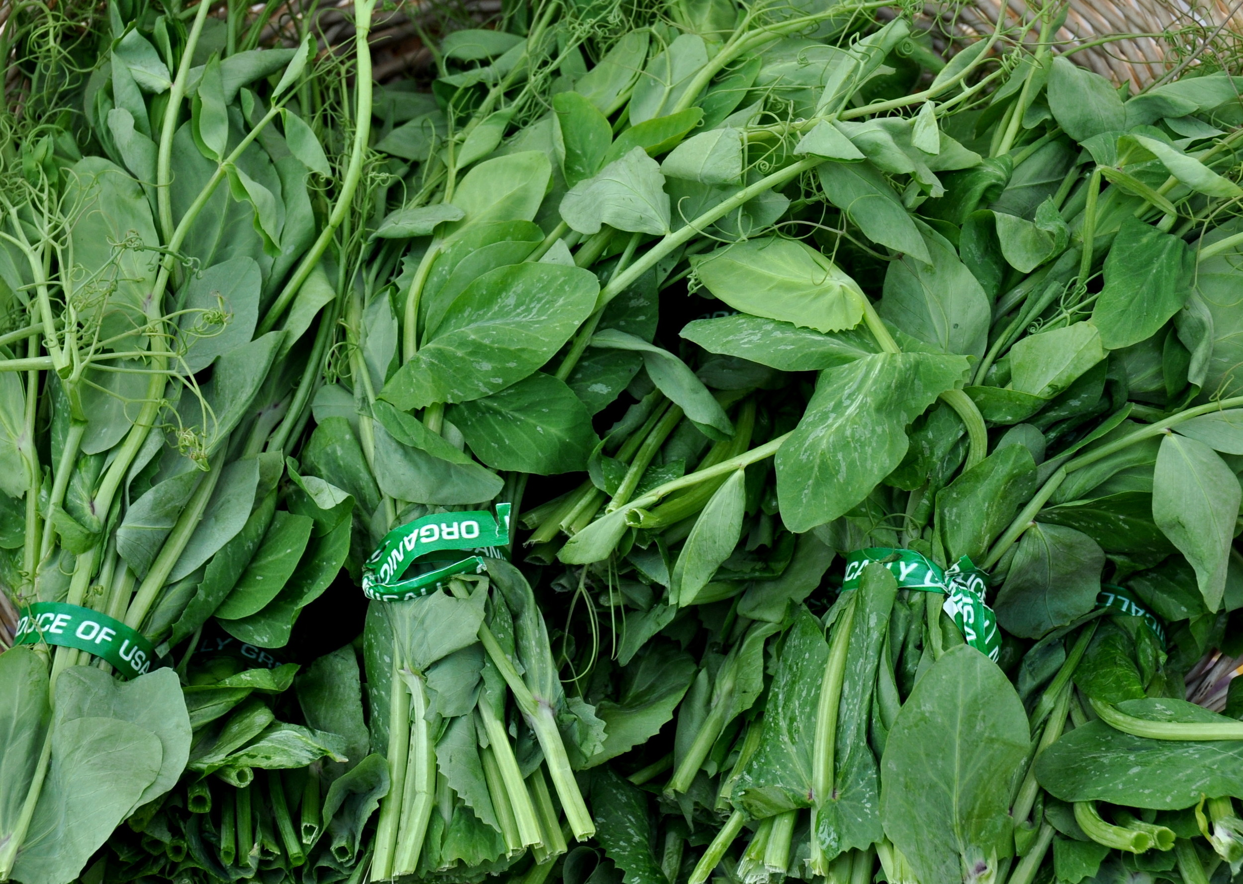 Pea vines from Oxbow Farm. Photo copyright 2012 by Zachary D. Lyons.