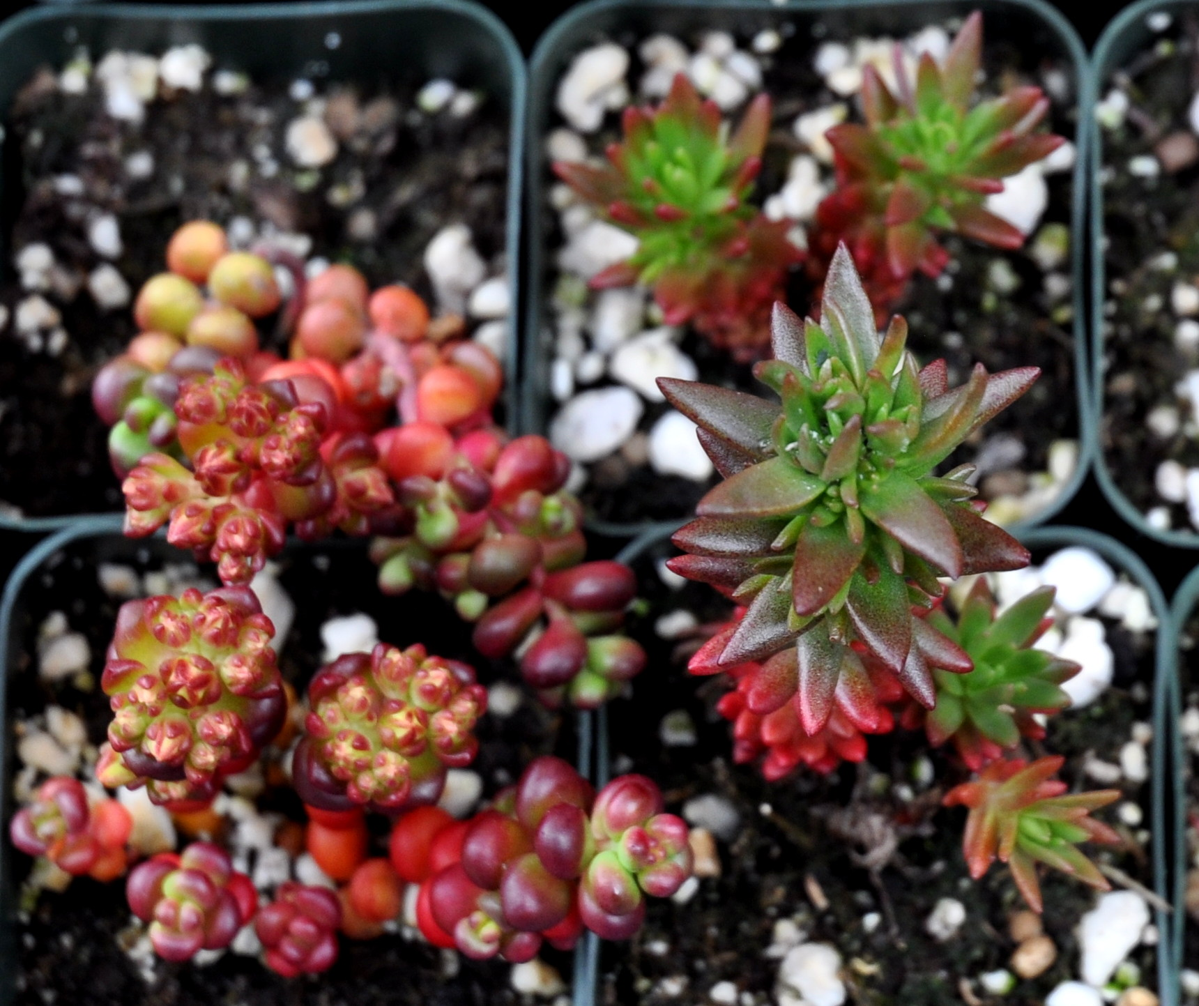 Stunning succulents from Phocas Farms. Photo copyright 2012 by Zachary D. Lyons.