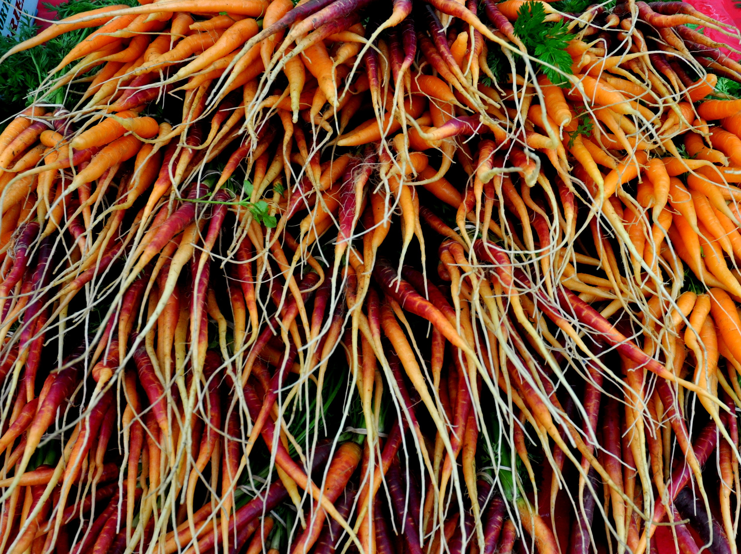 An explosion of carrots from Gaia's Natural Goods. Photo copyright 2012 by Zachary D. Lyons.