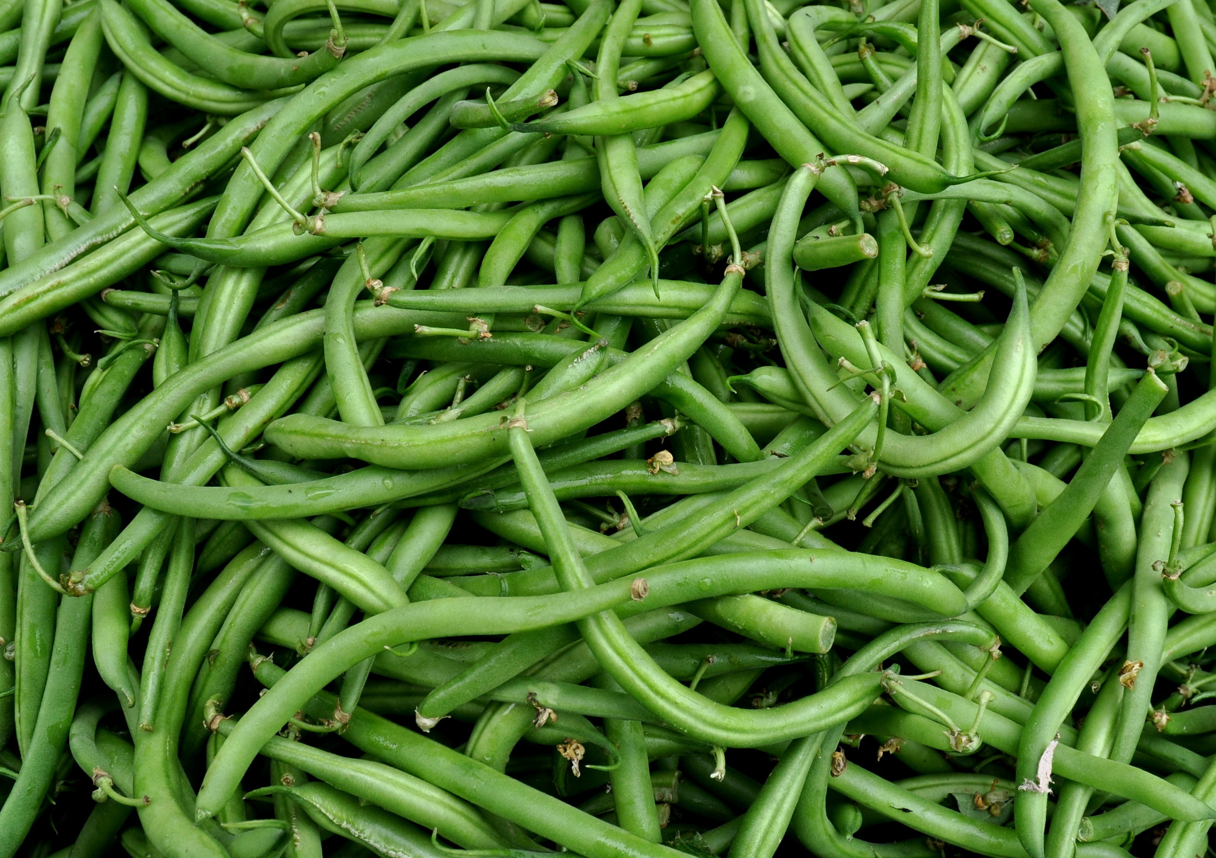 Green beans from Magana Farms. Photo copyright 2012 by Zachary D. Lyons.