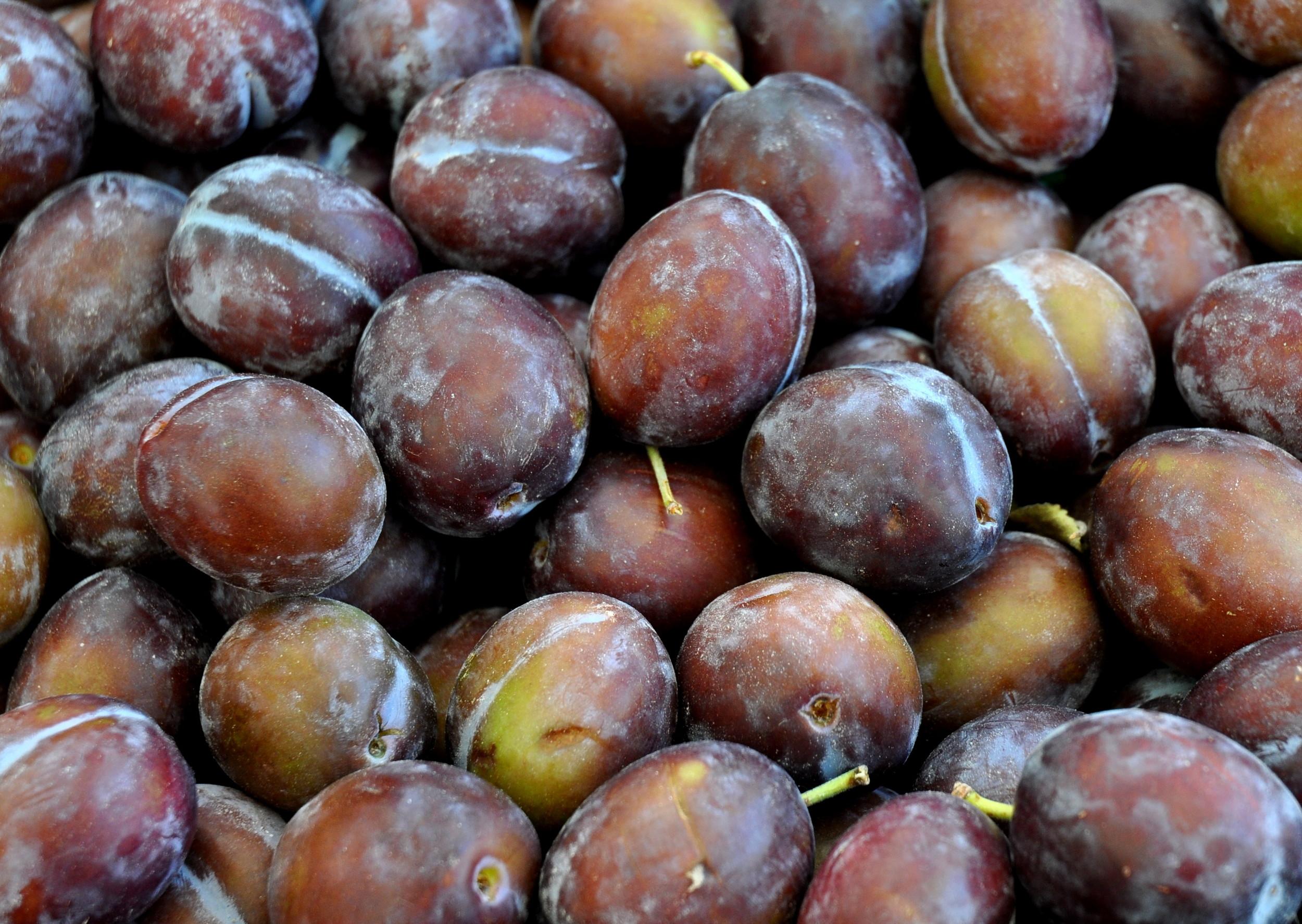 Early Italian prunes from Magana Farms. Photo copyright 2012 by Zachary D. Lyons.