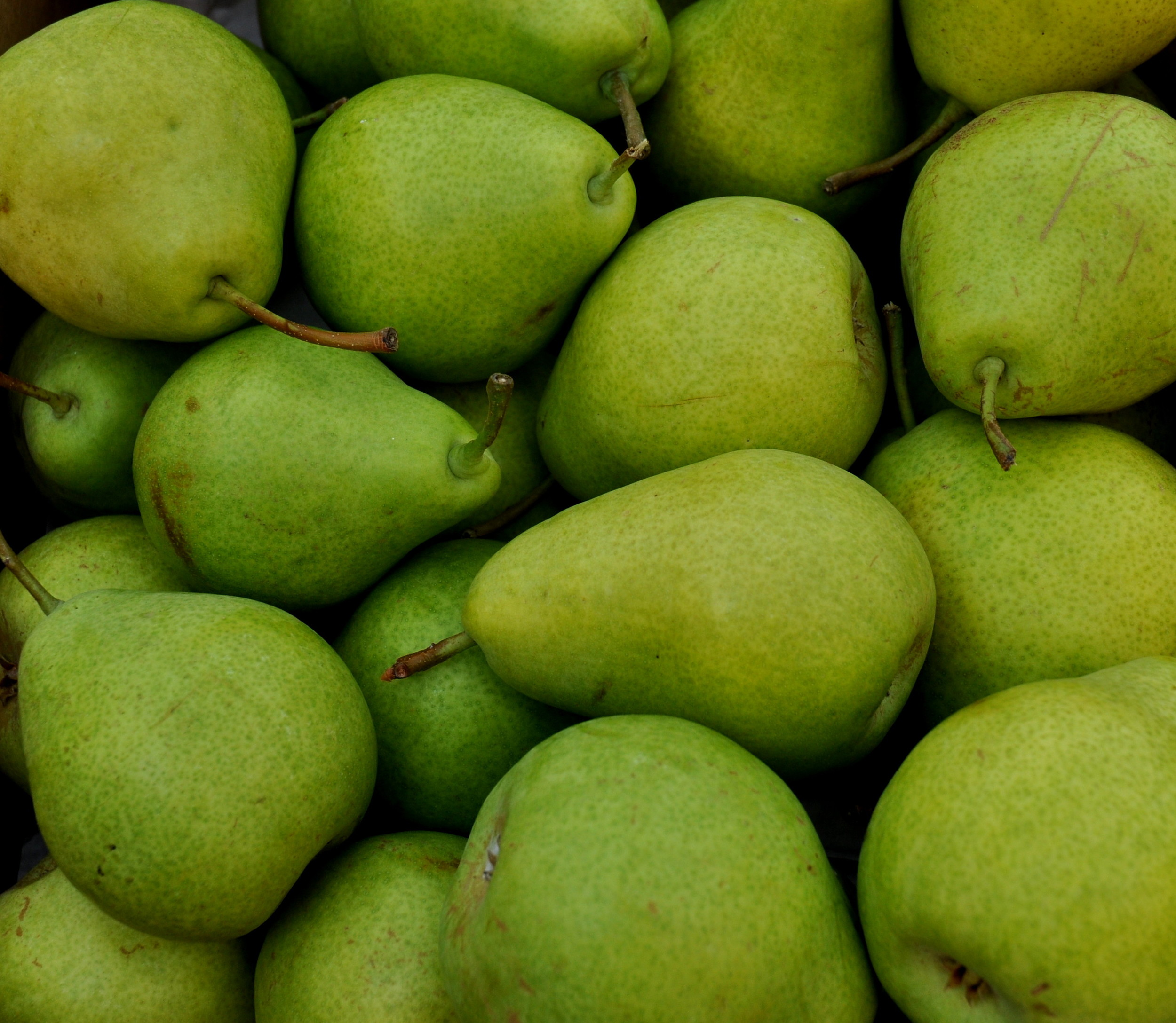 Clara Frijs pears from Booth Canyon Orchard. Photo copyright 2013 by Zachary D. Lyons.