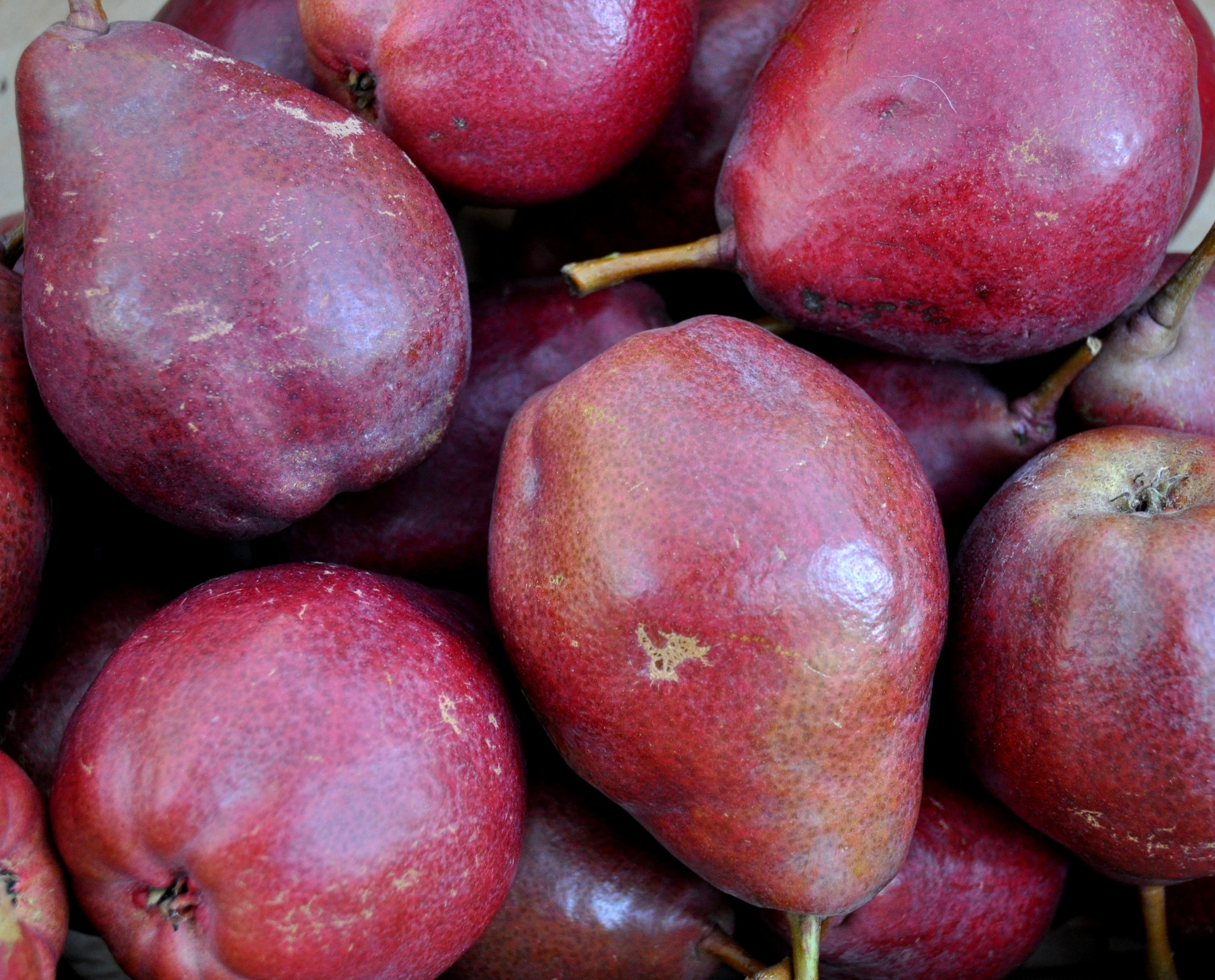 Purple Goddess pears from Jerzy Boyz. Photo copyright 2012 by Zachary D. Lyons.