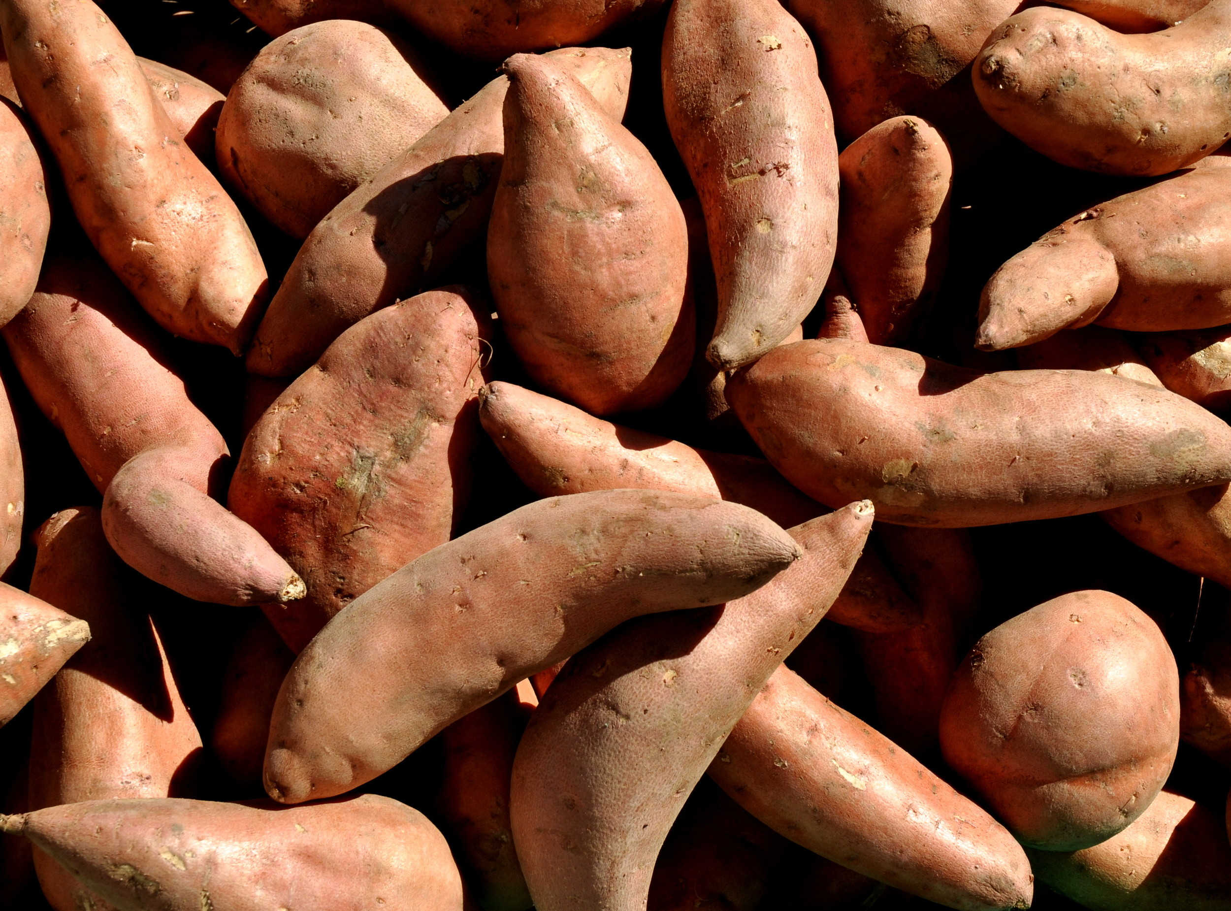 Sweet potatoes from Lyall Farms. Photo copyright 2012 by Zachary D. Lyons.