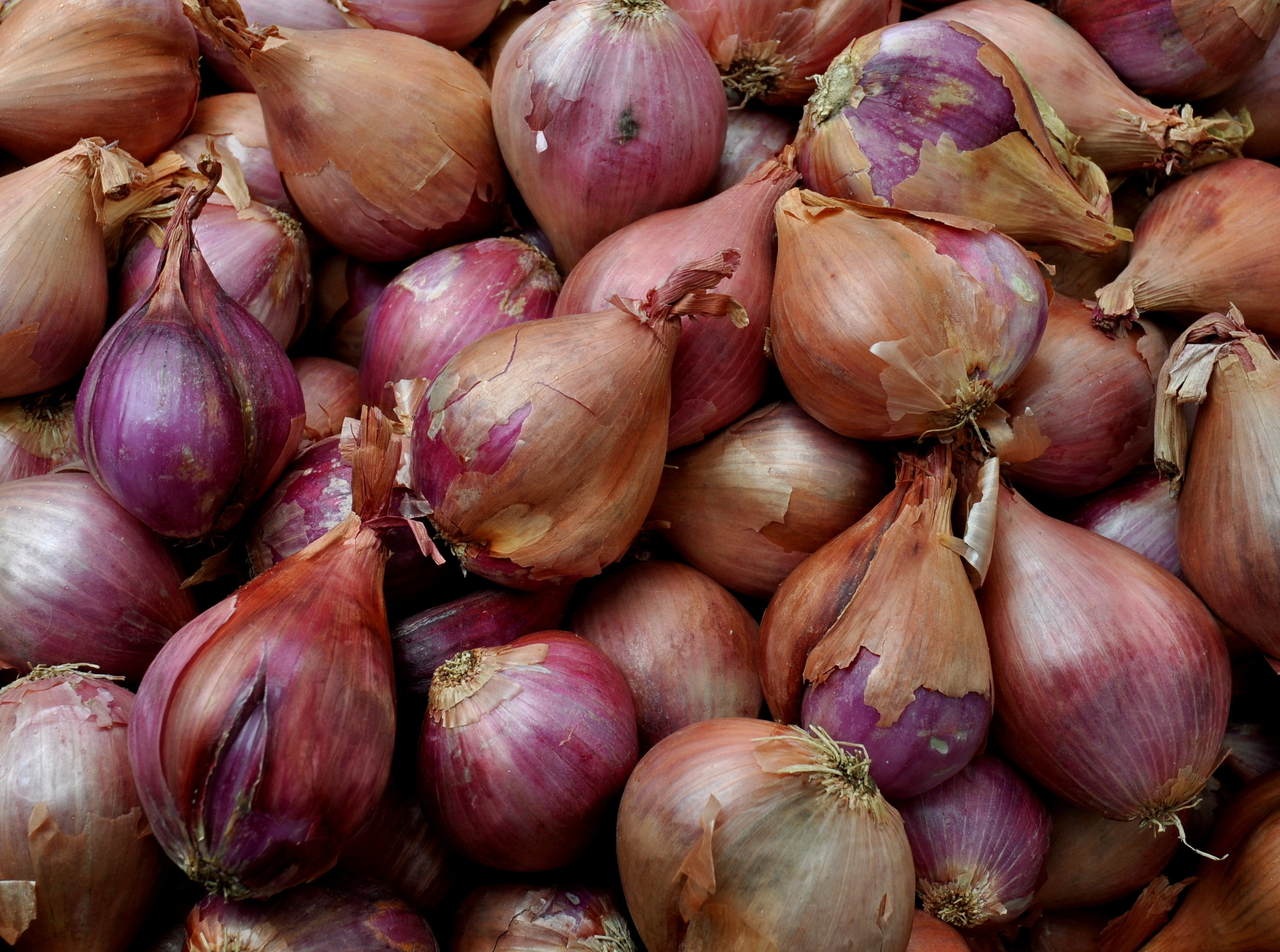 Shallots from Alvarez Organic Farms at Ballard Farmers Market. Copyright Zachary D. Lyons.