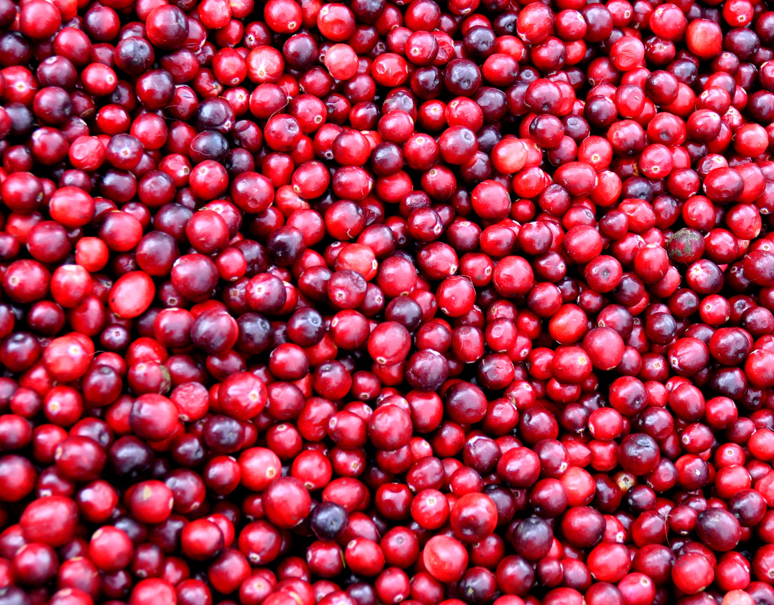 Fresh, local cranberries from Bloom Creek Cranberry Farm. Photo copyright 2012 by Zachary D. Lyons.