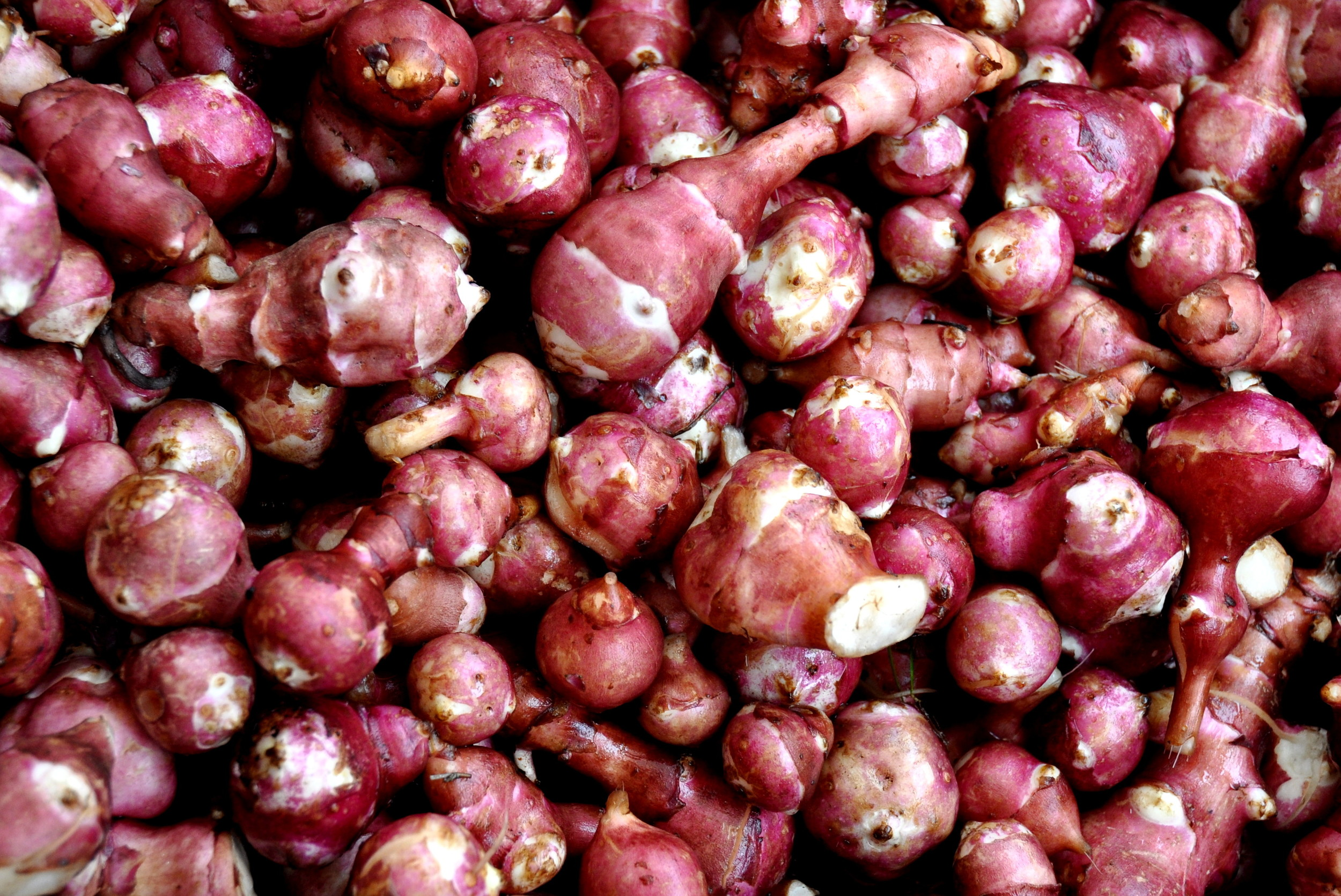 Red Sunchokes from Stoney Plains Organic Farm. Photo copyright 2012 by Zachary D. Lyons.