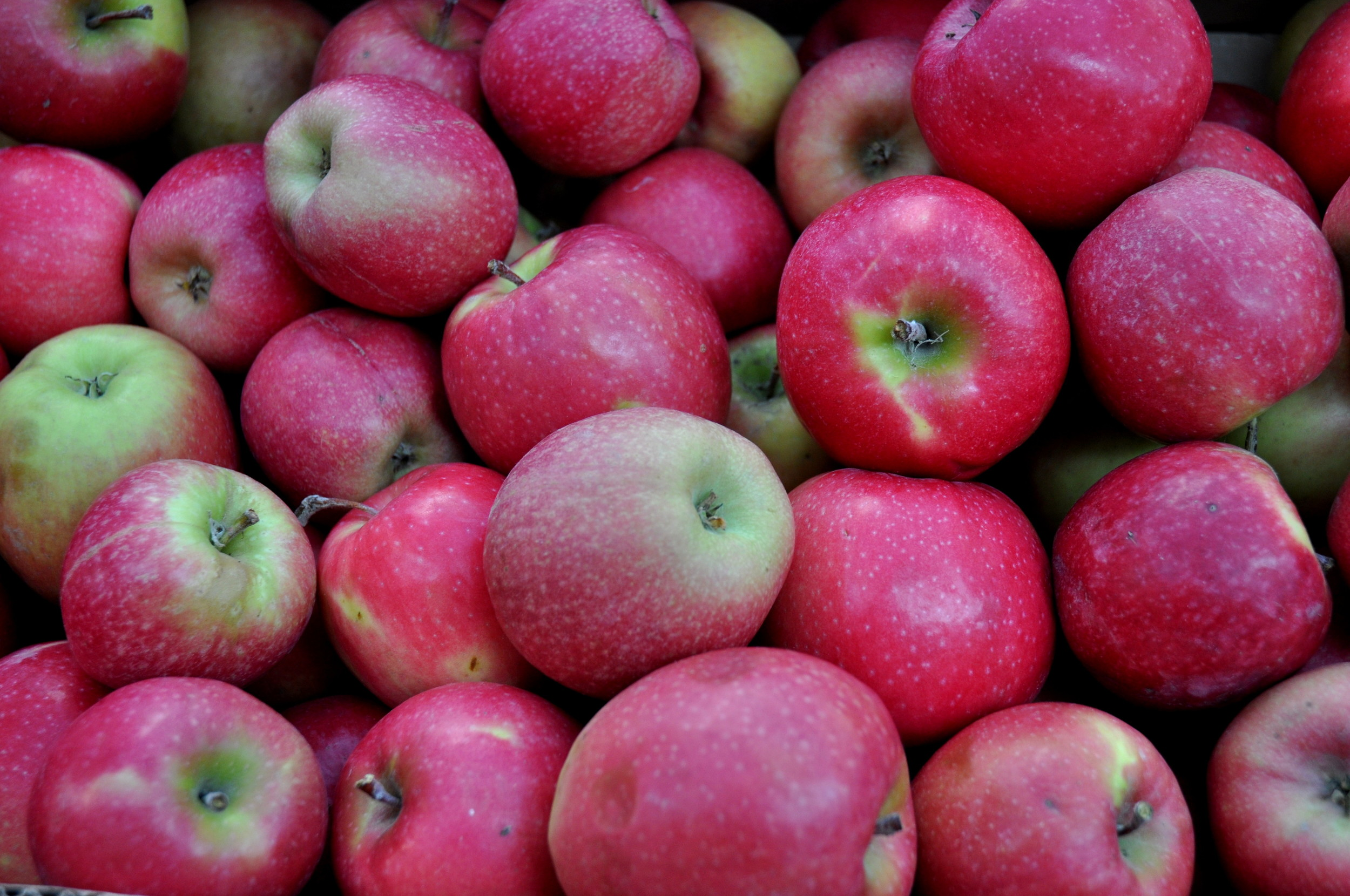 Pink Lady apples from Tiny's Organic Produce. Photo copyright 2012 by Zachary D. Lyons.
