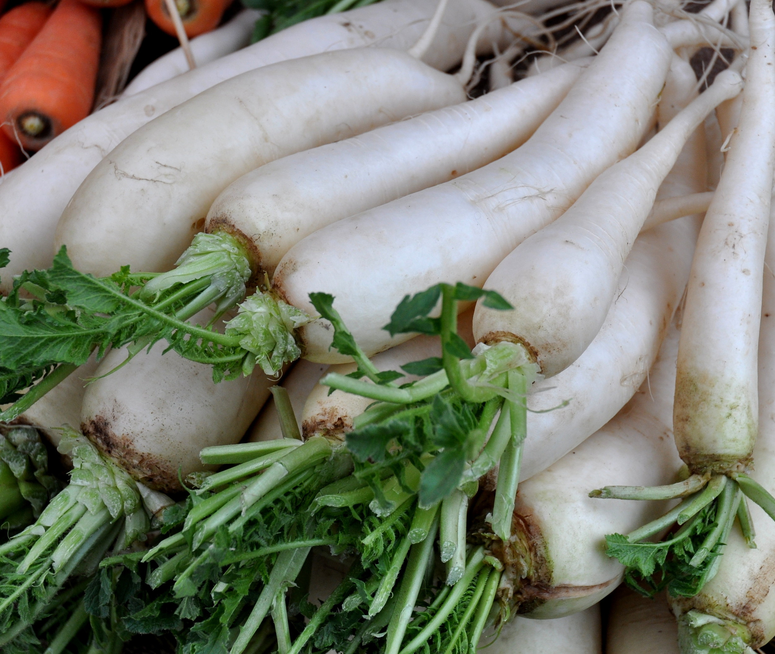 Daikon radishes from One Leaf Farm. Photo copyright 2012 by Zachary D. Lyons.