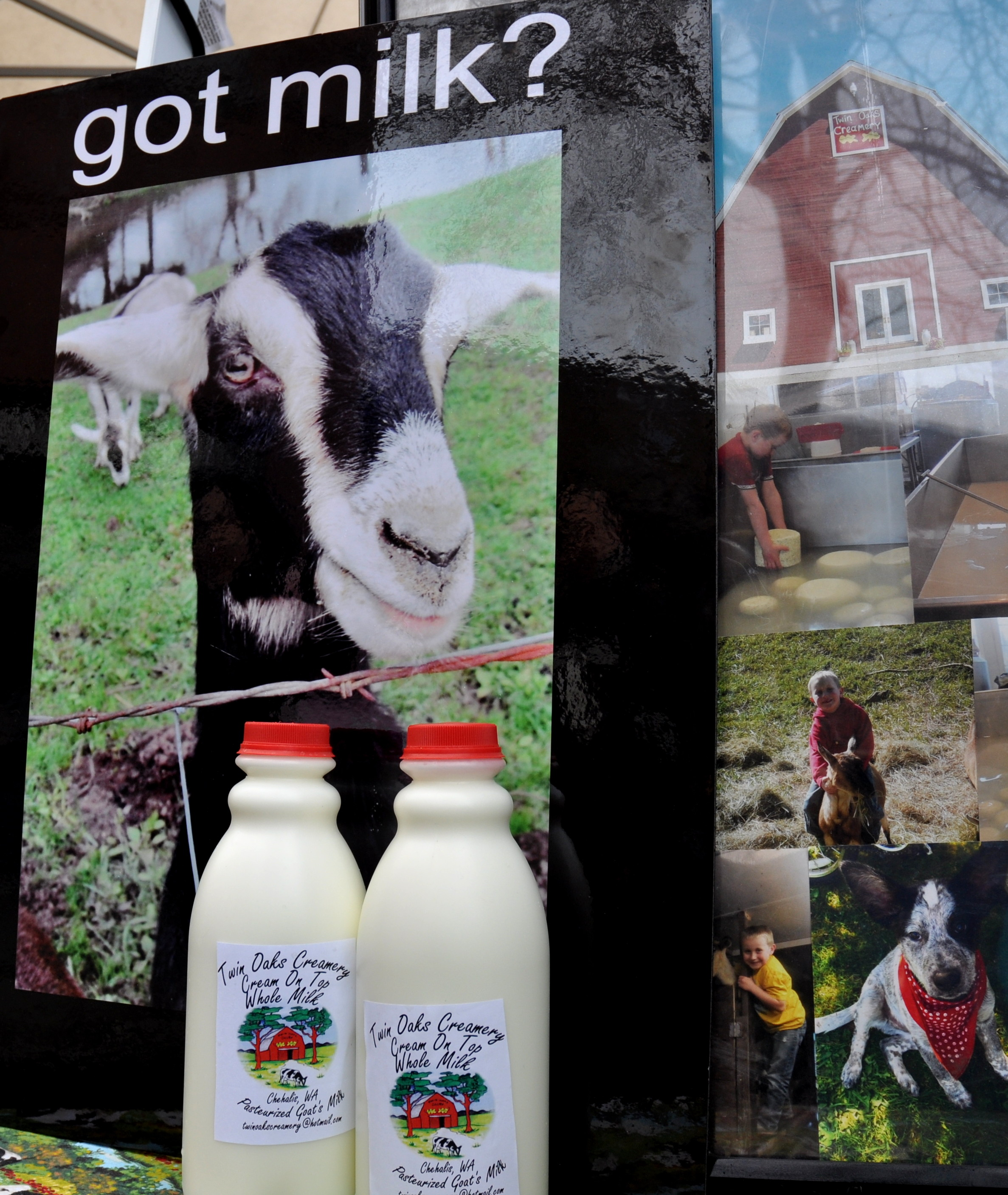 Goat milk from Twin Oaks Creamery. Photo copyright 2013 by Zachary D. Lyons.