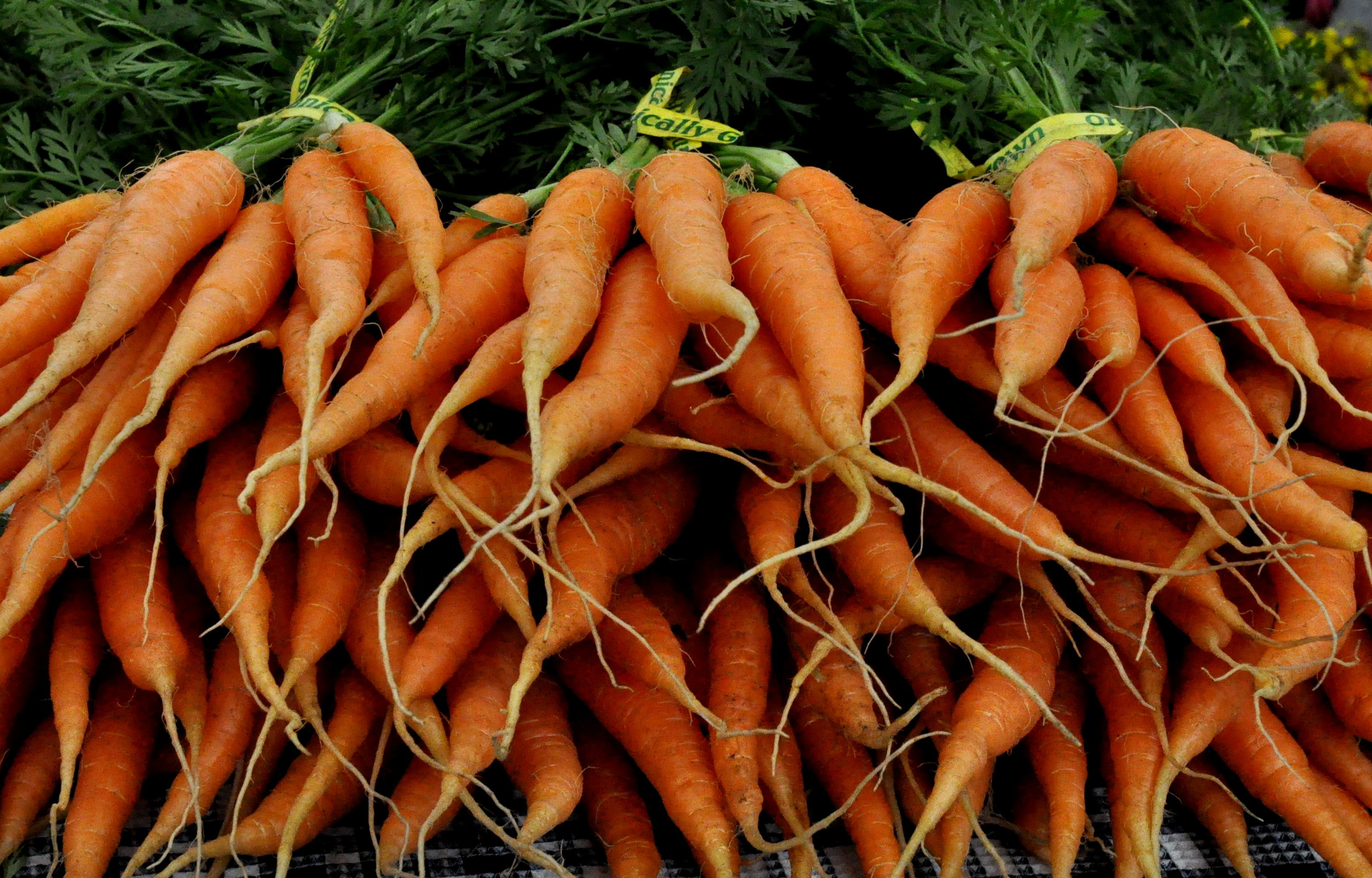 Carrots from Colinwood Farms. Photo copyright 2013 by Zachary D. Lyons.