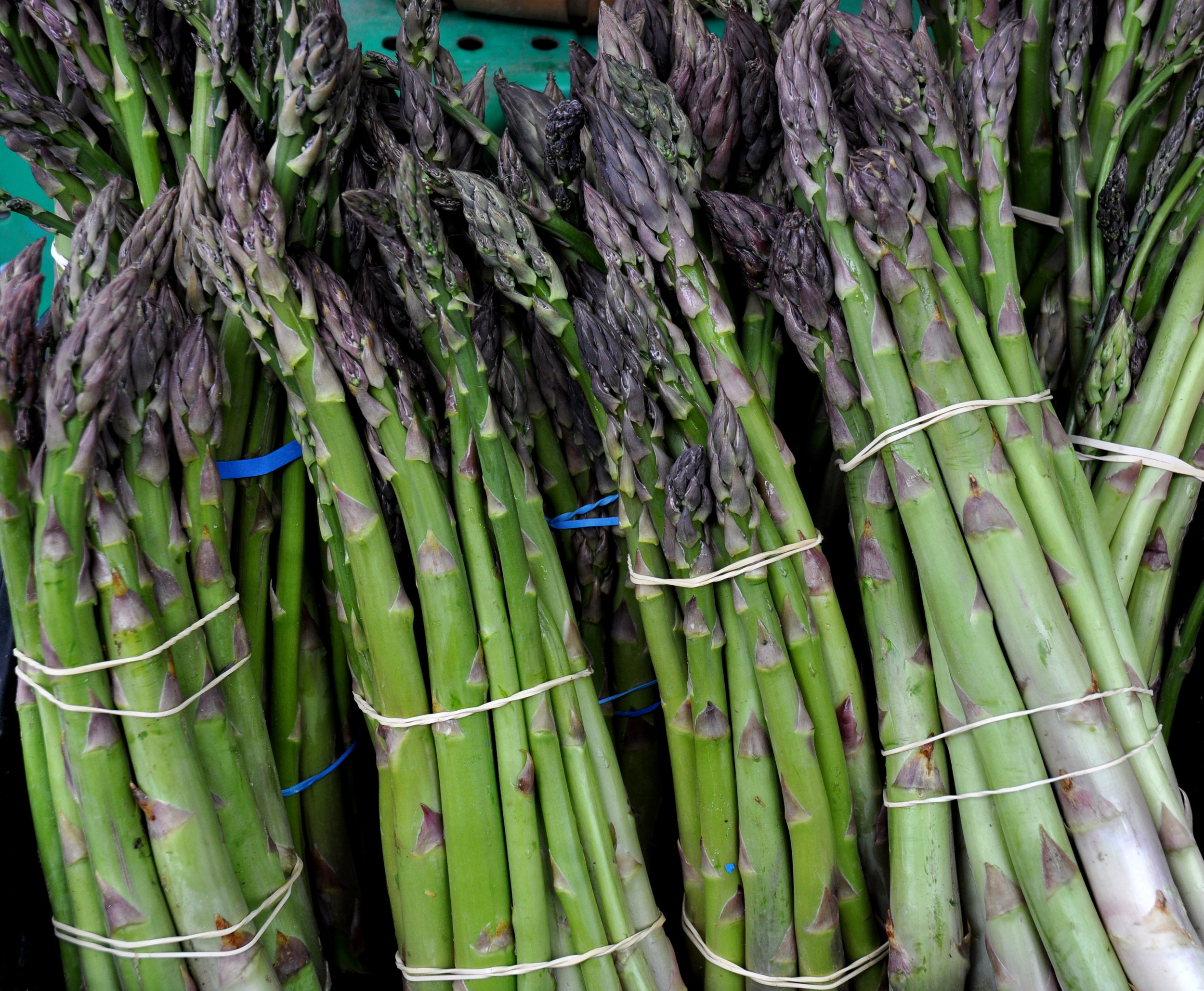 First of the year asparagus from Lyall Farms. Photo copyright 2013 by Zachary D. Lyons.