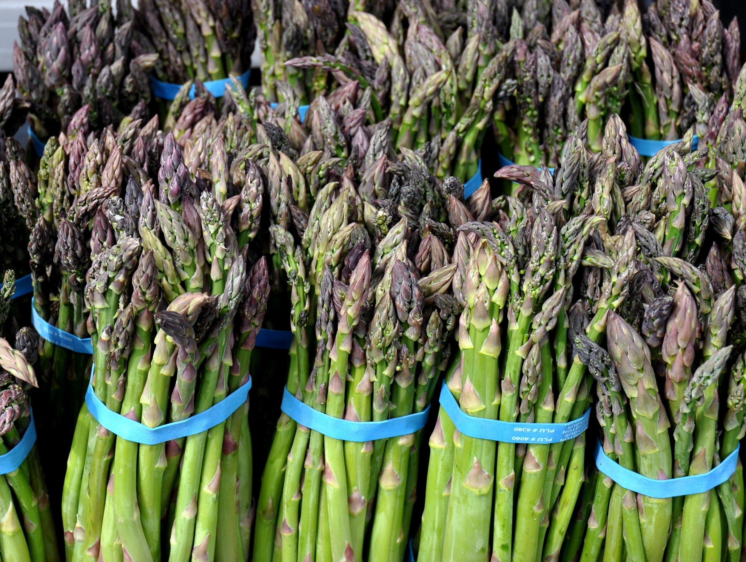 Asparagus from Collins Family Orchards. Photo copyright 2013 by Zachary D. Lyons.