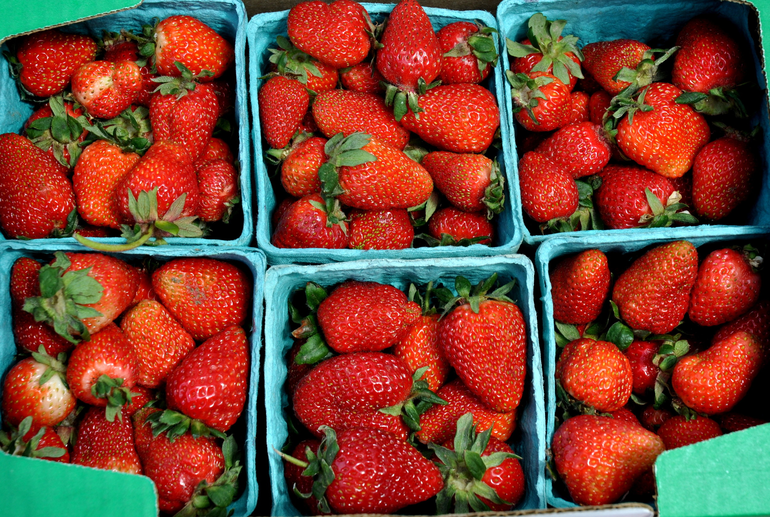 First-of-the-season organic strawberries from Tiny's Organic Produce. Photo copyright 2013 by Zachary D. Lyons.