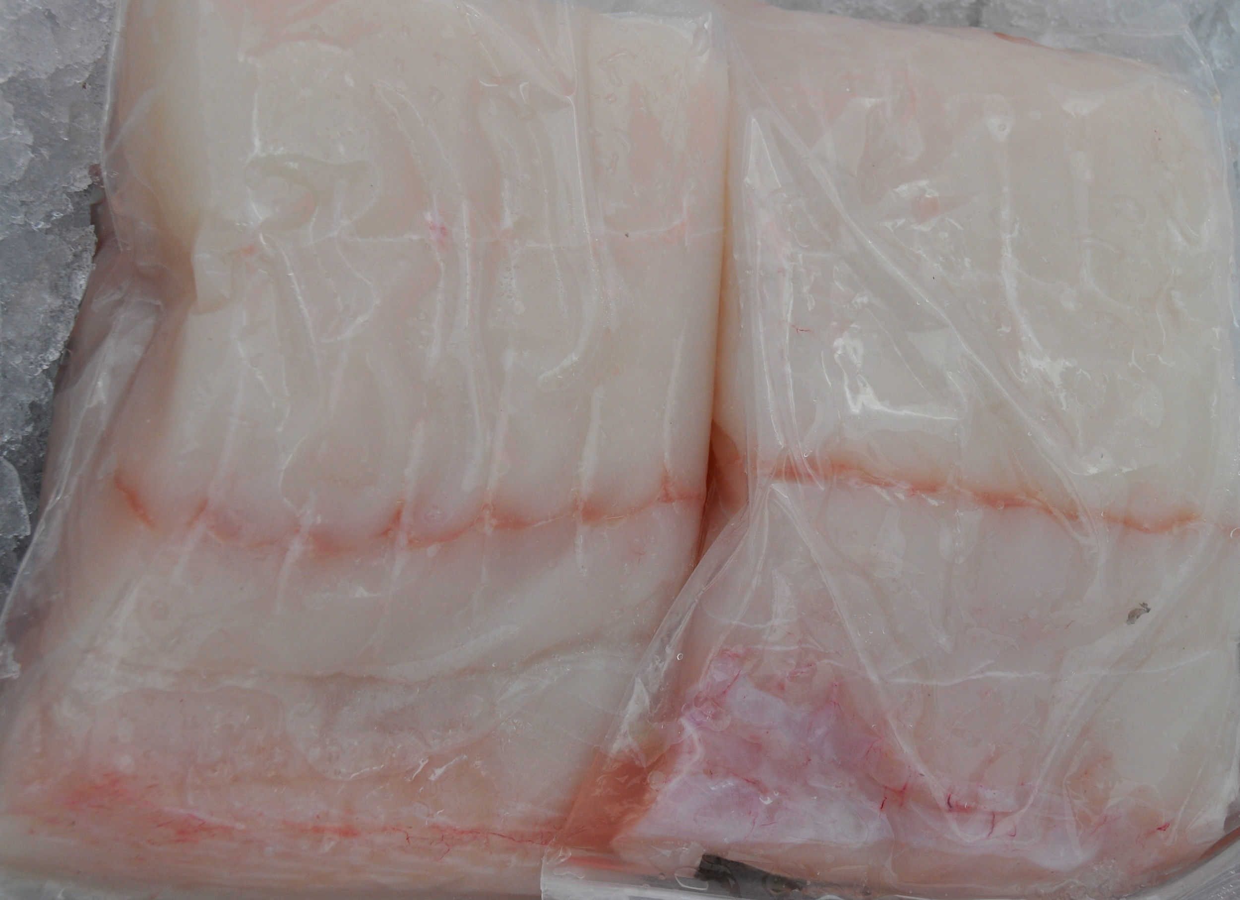 Fresh halibut from Wilson Fish. Photo copyright 2013 by Zachary D. Lyons.
