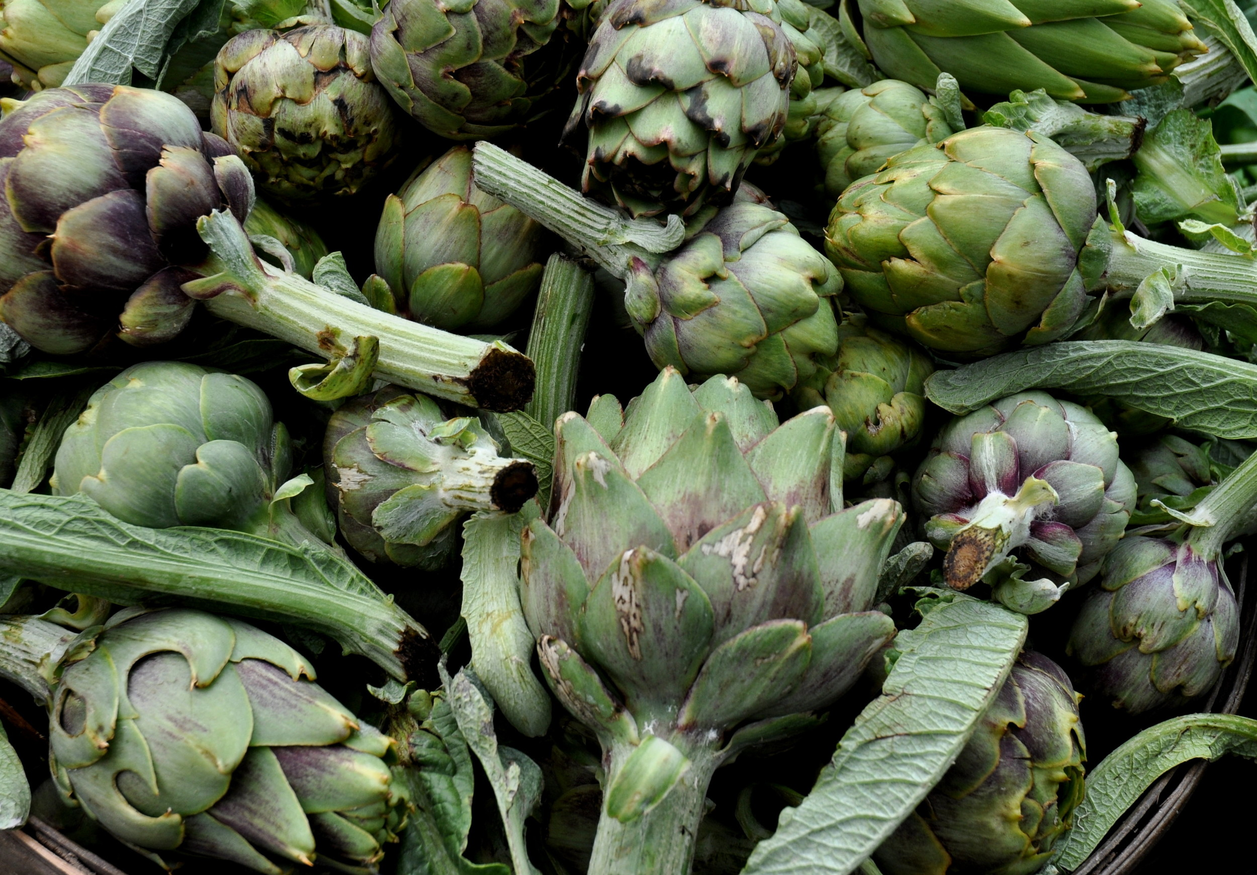 Artichokes from Nash's Organic Produce. Photo copyright 2013 by Zachary D. Lyons.