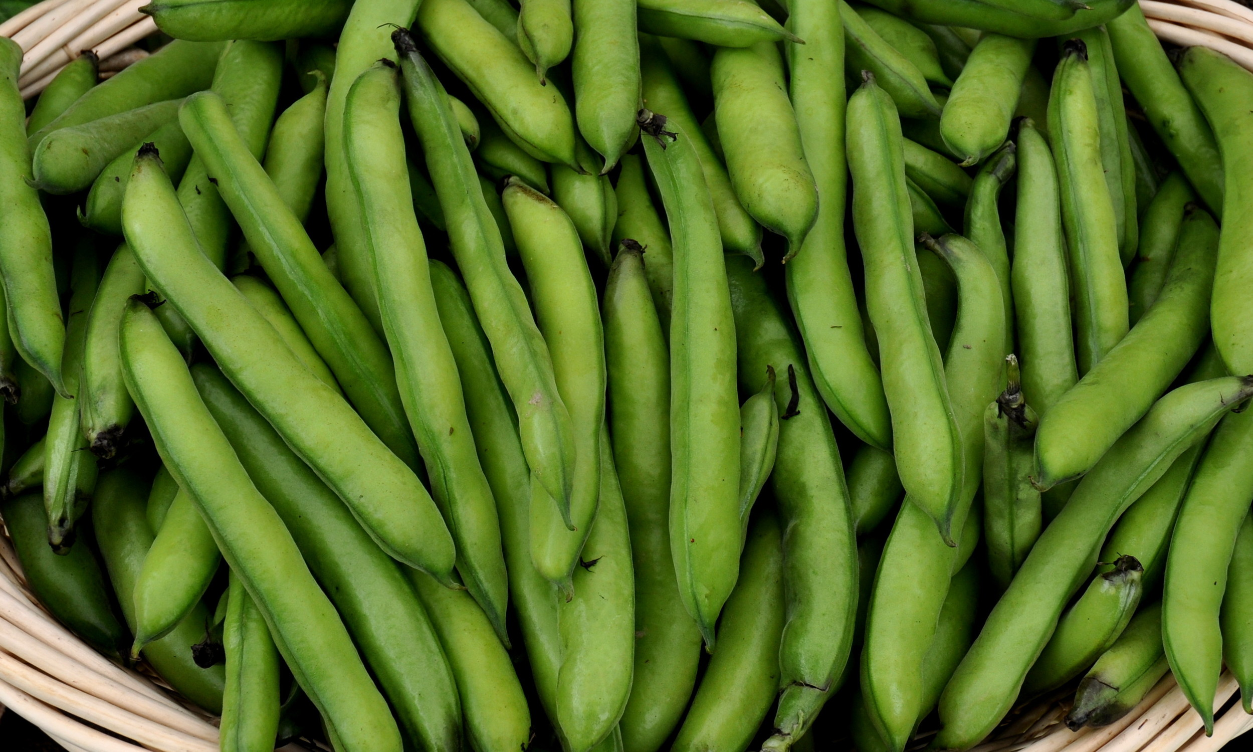 Fava beans from One Leaf Farm. Photo copyright 2013 by Zachary D. Lyons.