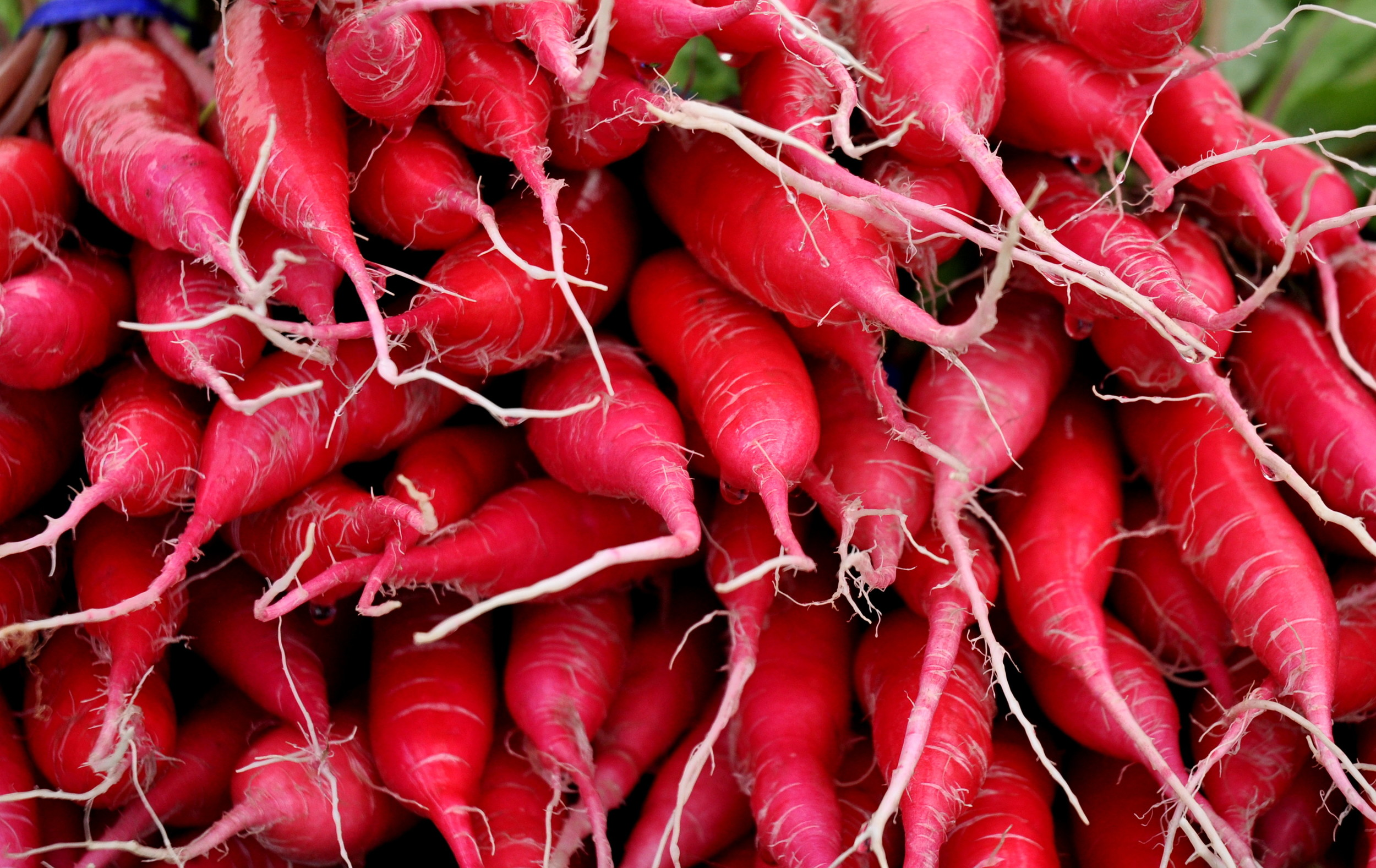 Shunkyo radishes from One Leaf Farm. Photo copyright 2013 by Zachary D. Lyons.