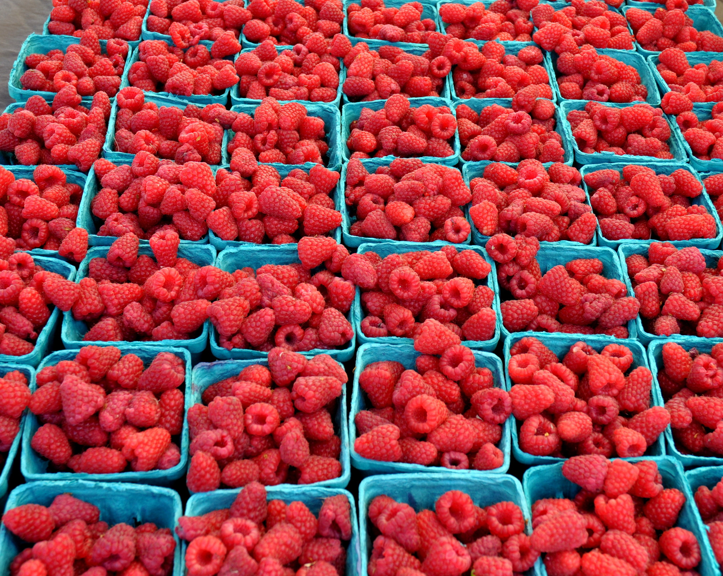 Raspberries from Alm Hill Gardens. Photo copyright 2013 by Zachary D. Lyons.