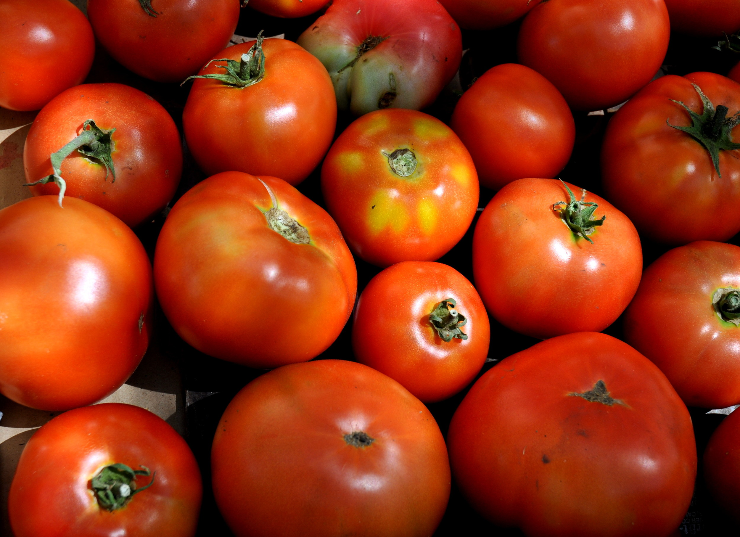 Beefsteak tomatoes from Colinwood Farms. Photo copyright 2013 by Zachary D. Lyons.