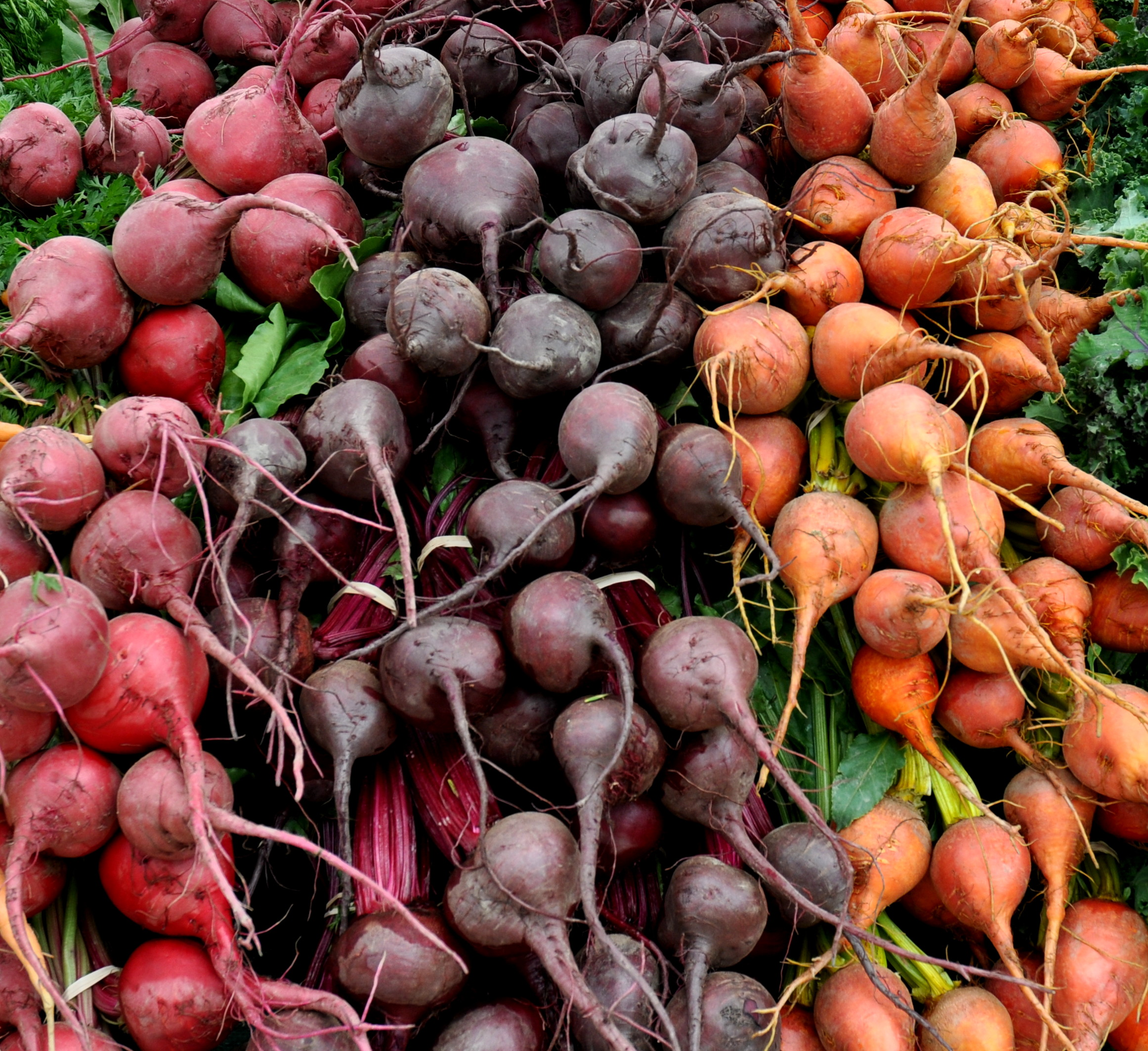 Beets from Gaia's Harmony Farm. Photo copyright 2013 by Zachary D. Lyons.
