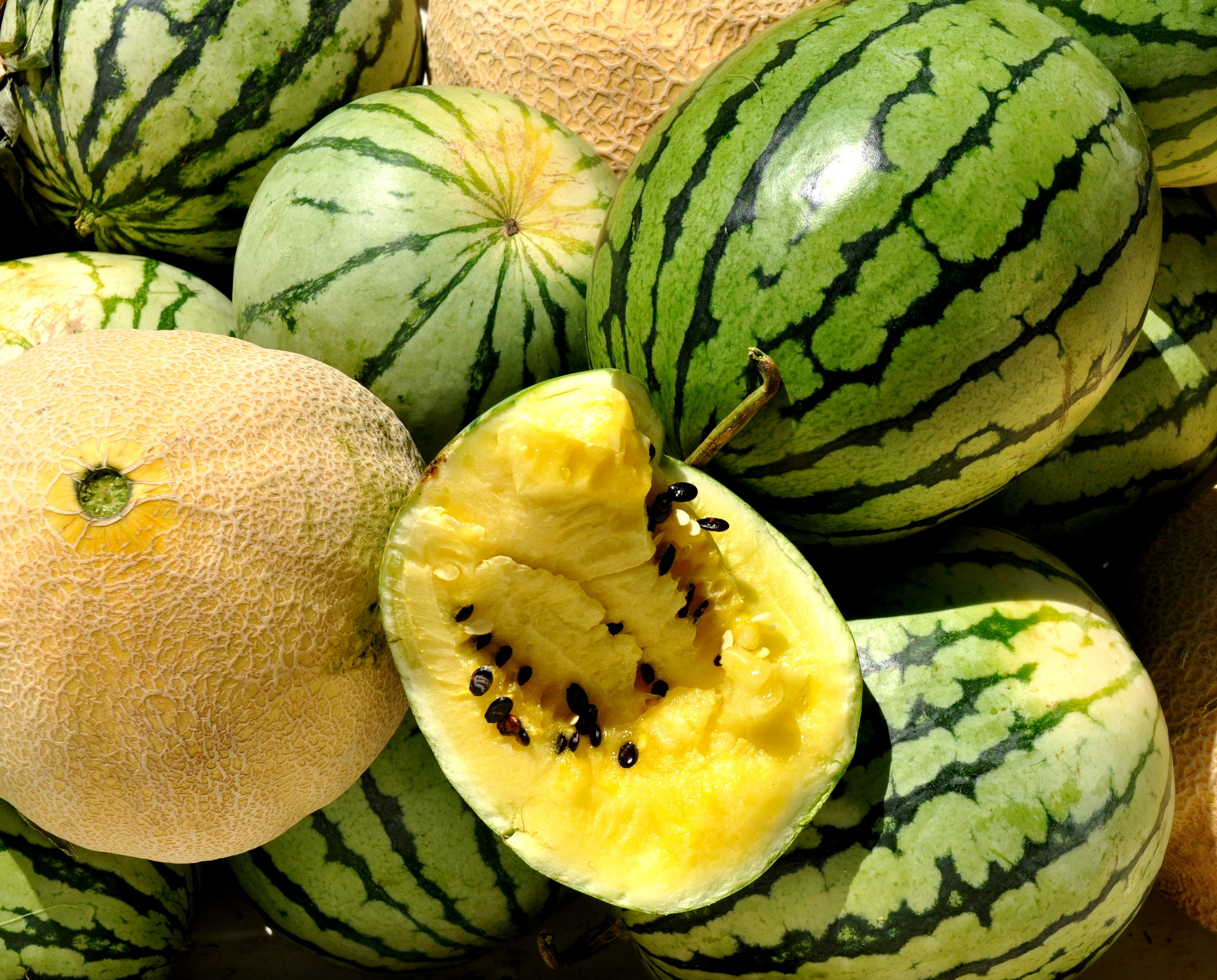 Cantaloupe melons and Yellow Doll watermelons from Lyall Farms. Photo copyright 2013 by Zachary D. Lyons.