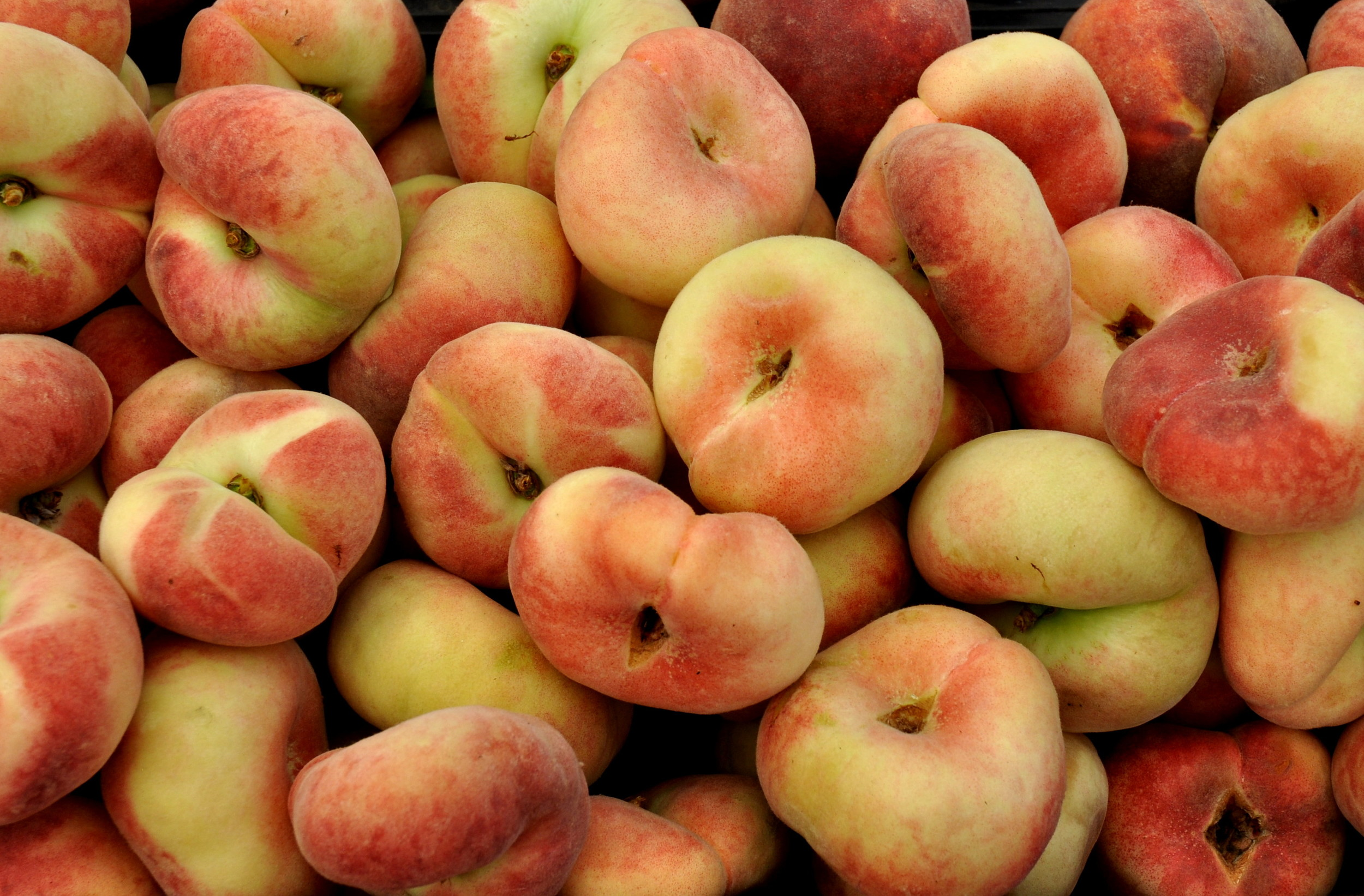 Donut peaches from Magana Farms. Photo copyright 2013 by Zachary D. Lyons.