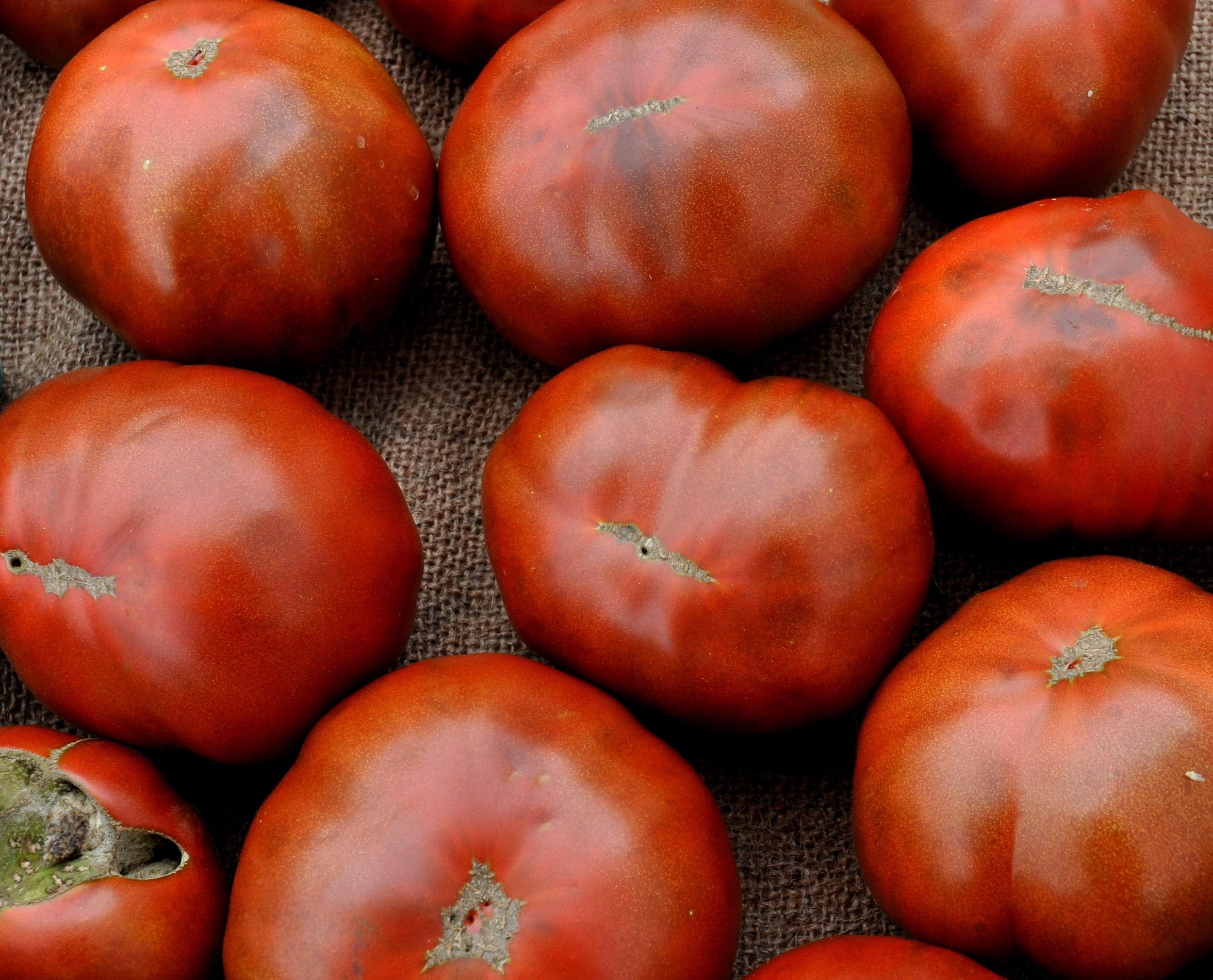Paul Robeson heirloom tomatoes from One Leaf Farm. Photo copyright 2011 by Zachary D. Lyons.