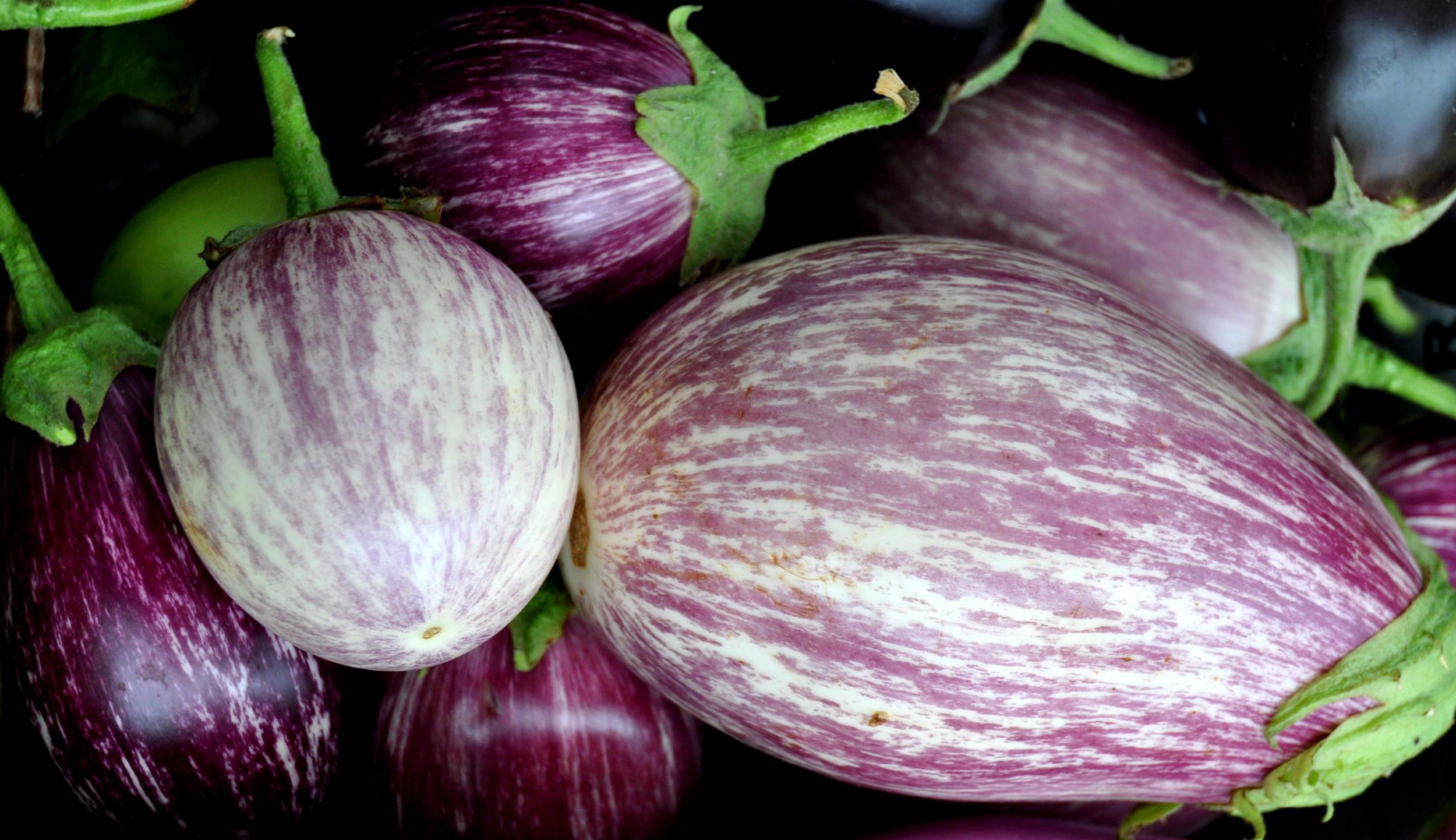Purple Rain eggplant from Alvarez Organic Farms. Copyright Zachary D. Lyons.